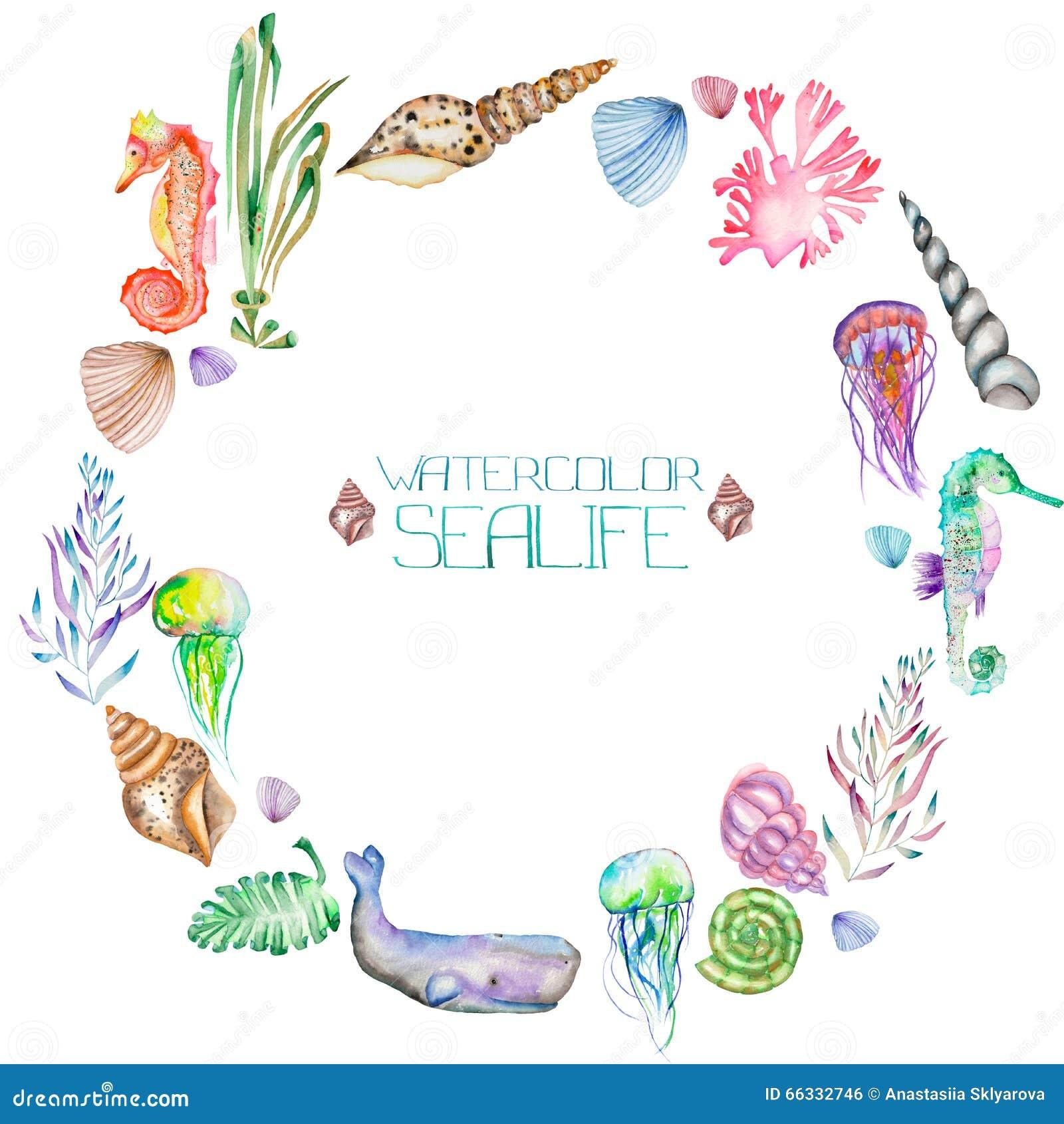 Ένα στεφάνι (πλαίσιο κύκλων) με τα κοχύλια watercolor, seahorses, τη μέδουσα, το φύκι και άλλα στοιχεία θάλασσας
