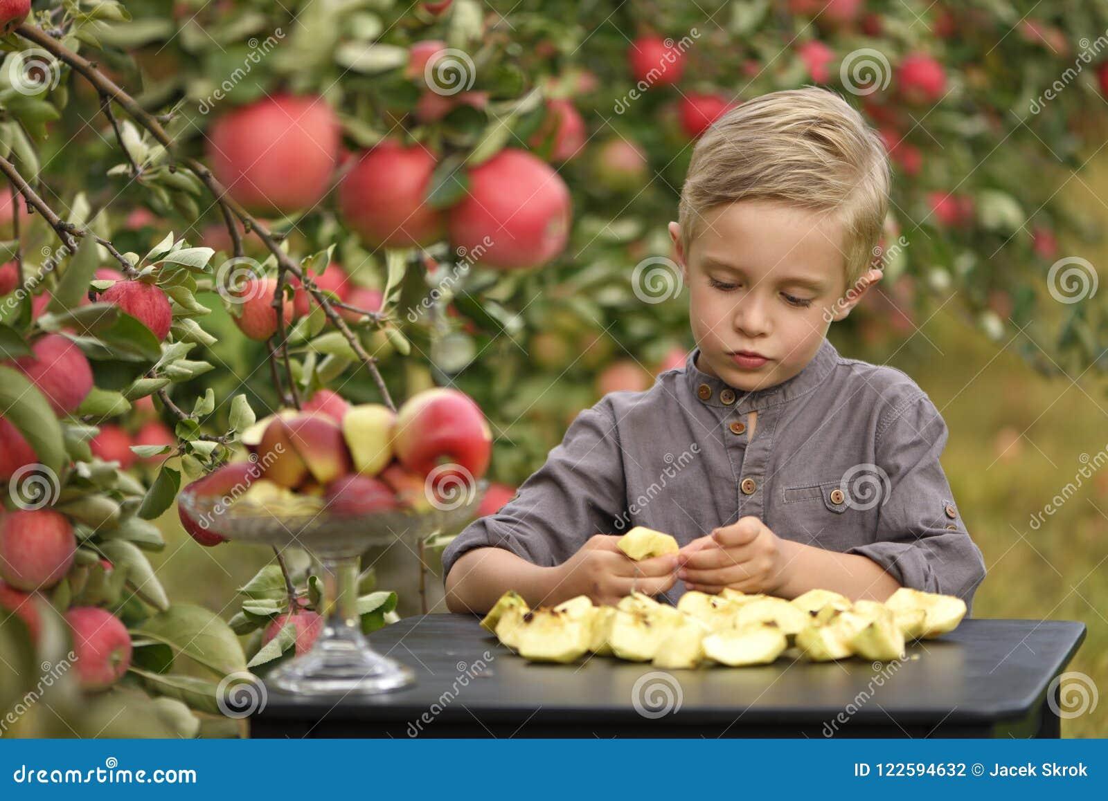 Ένα χαριτωμένο, χαμογελώντας αγόρι επιλέγει τα μήλα σε έναν οπωρώνα μήλων και κρατά ένα μήλο