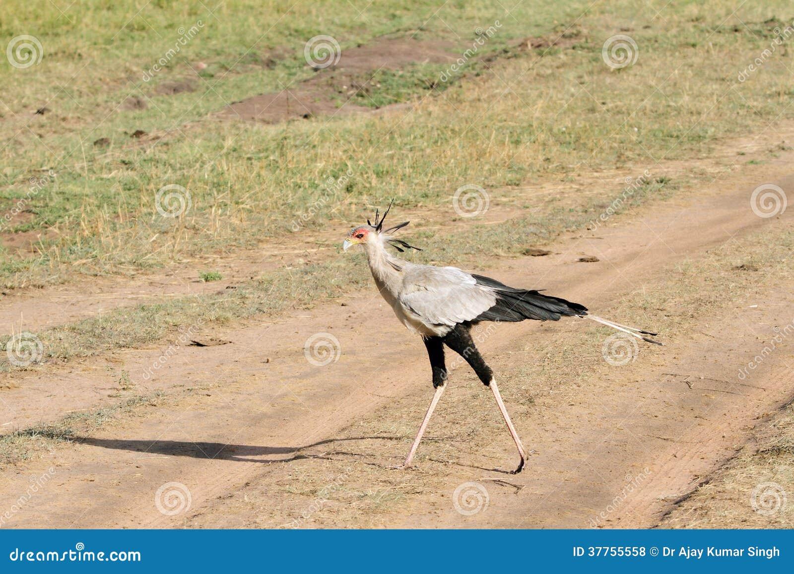 Γυναίκα παίρνει μεγάλο πουλί