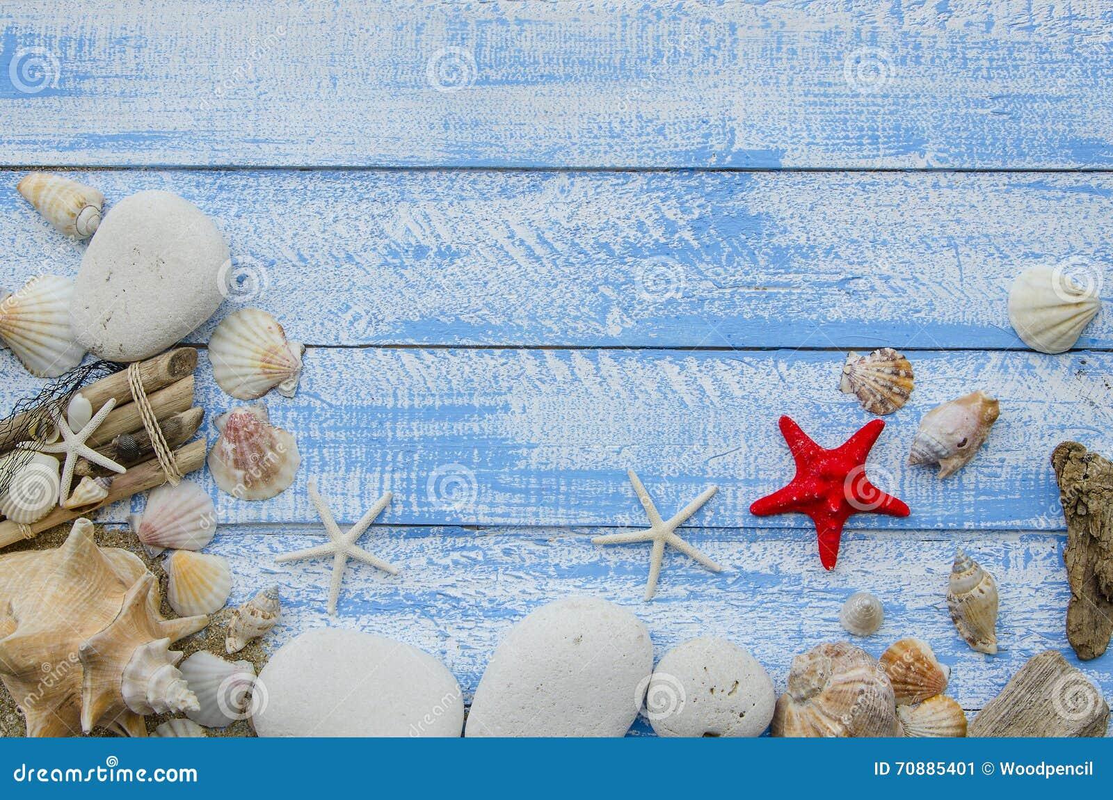 884b7a619d Έννοια θάλασσας θερινών παραλιών Μπλε ξύλινο υπόβαθρο με τα διαφορετικά  κοχύλια