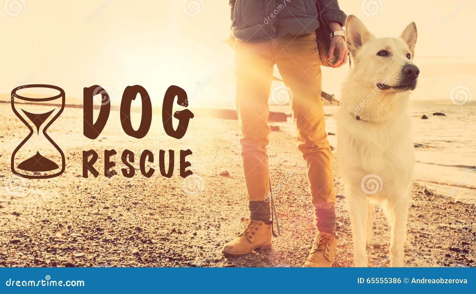 Έννοια διάσωσης σκυλιών