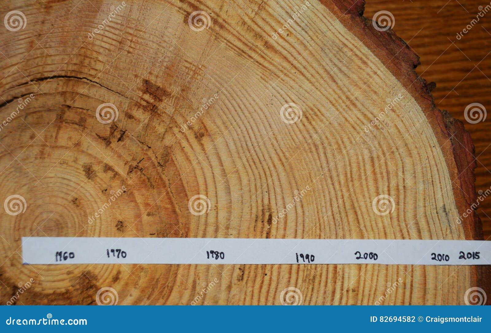 δέντρο δαχτυλιδιών τμήμα χρονολογημένος η χορήγηση των περιοχών περιοχής που ψαλιδίζουν τη χρωματισμένη ανύψωση το συμπεριλαμβανό