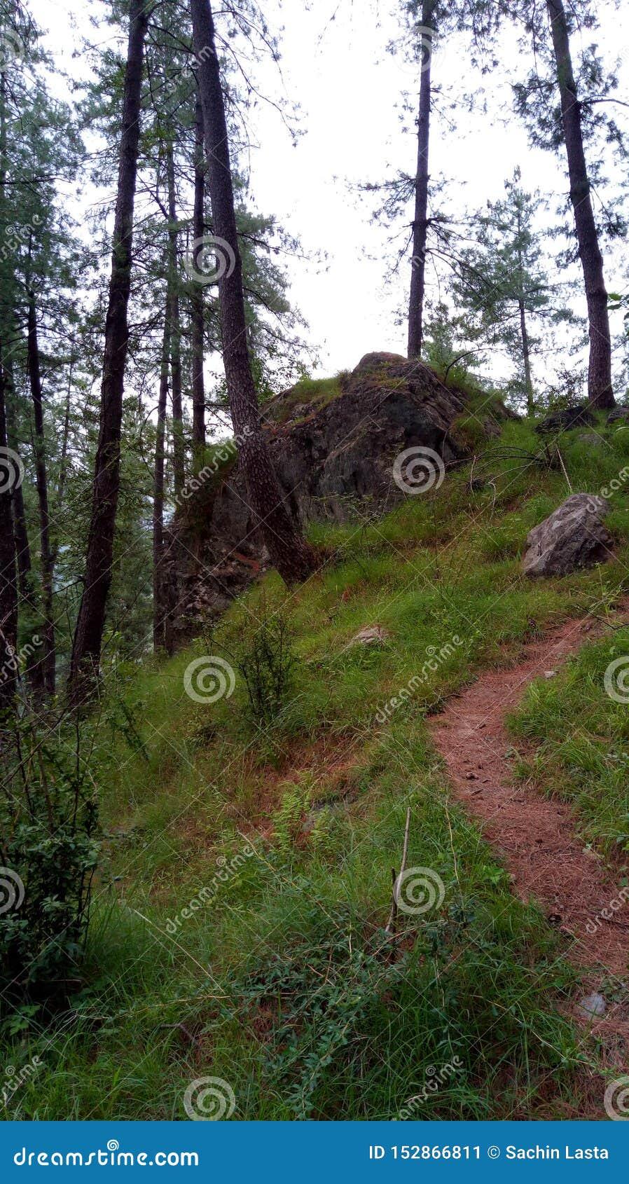 Έξοχοι ζαλίζοντας λόφοι Shimla απόψεων φύσης