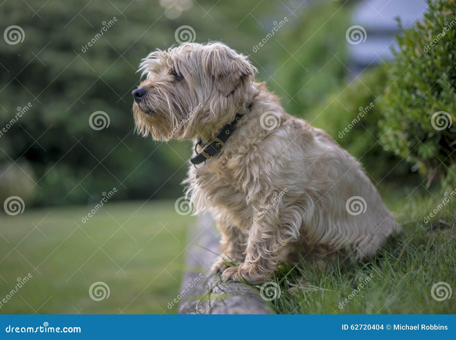 Έρευνες σκυλιών