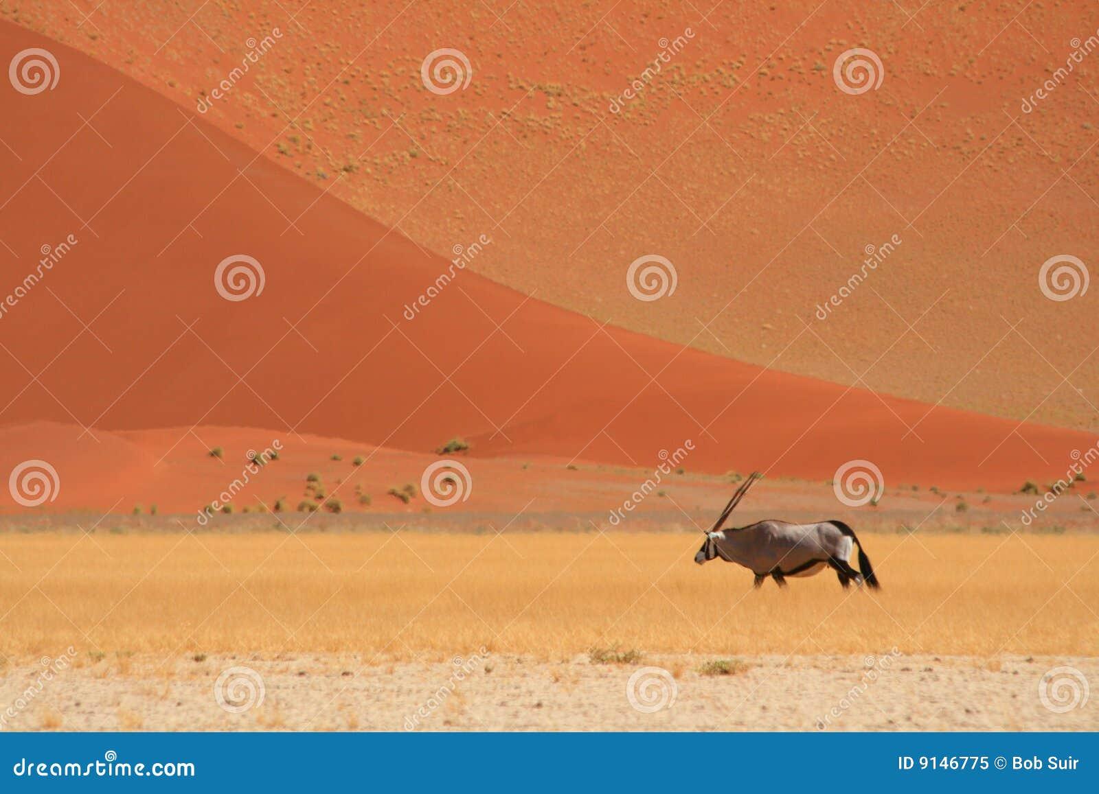 έρημος gemsbok