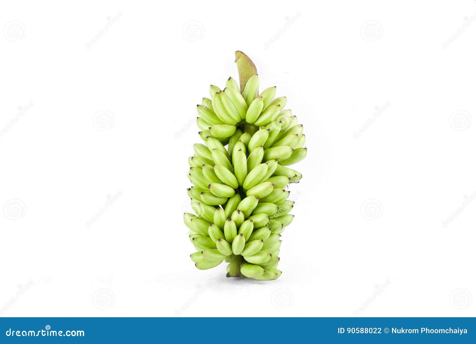δέσμη των ακατέργαστων χρυσών μπανανών στα άσπρα τρόφιμα φρούτων μπανανών MAS Pisang υποβάθρου υγιή που απομονώνονται
