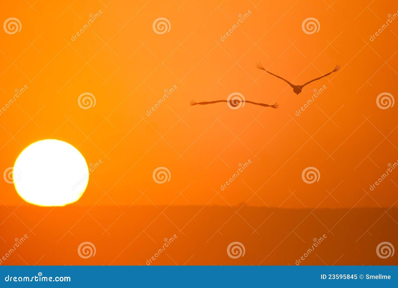 ήλιος γερανών