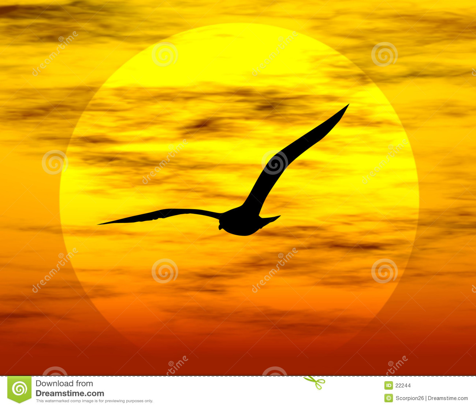 ήλιος πουλιών