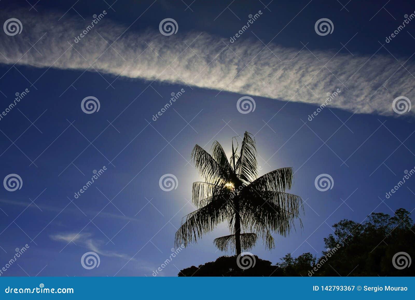 Ίχνη στον ουρανό που πλαισιώνει το απομονωμένο δέντρο καρύδων