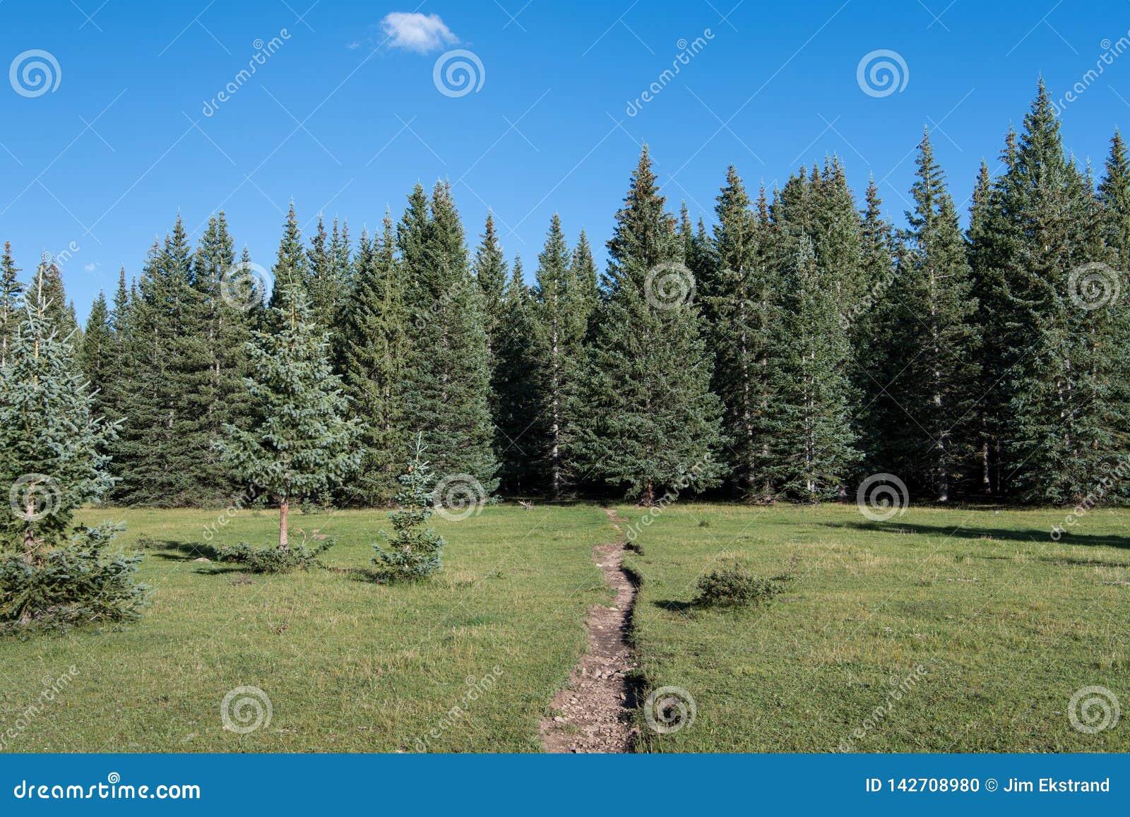 Ίχνος πεζοπορίας που διασχίζει ένα όμορφο αλπικό λιβάδι προς ένα δάσος των δέντρων ερυθρελατών και έλατου κάτω από έναν μπλε ουρα