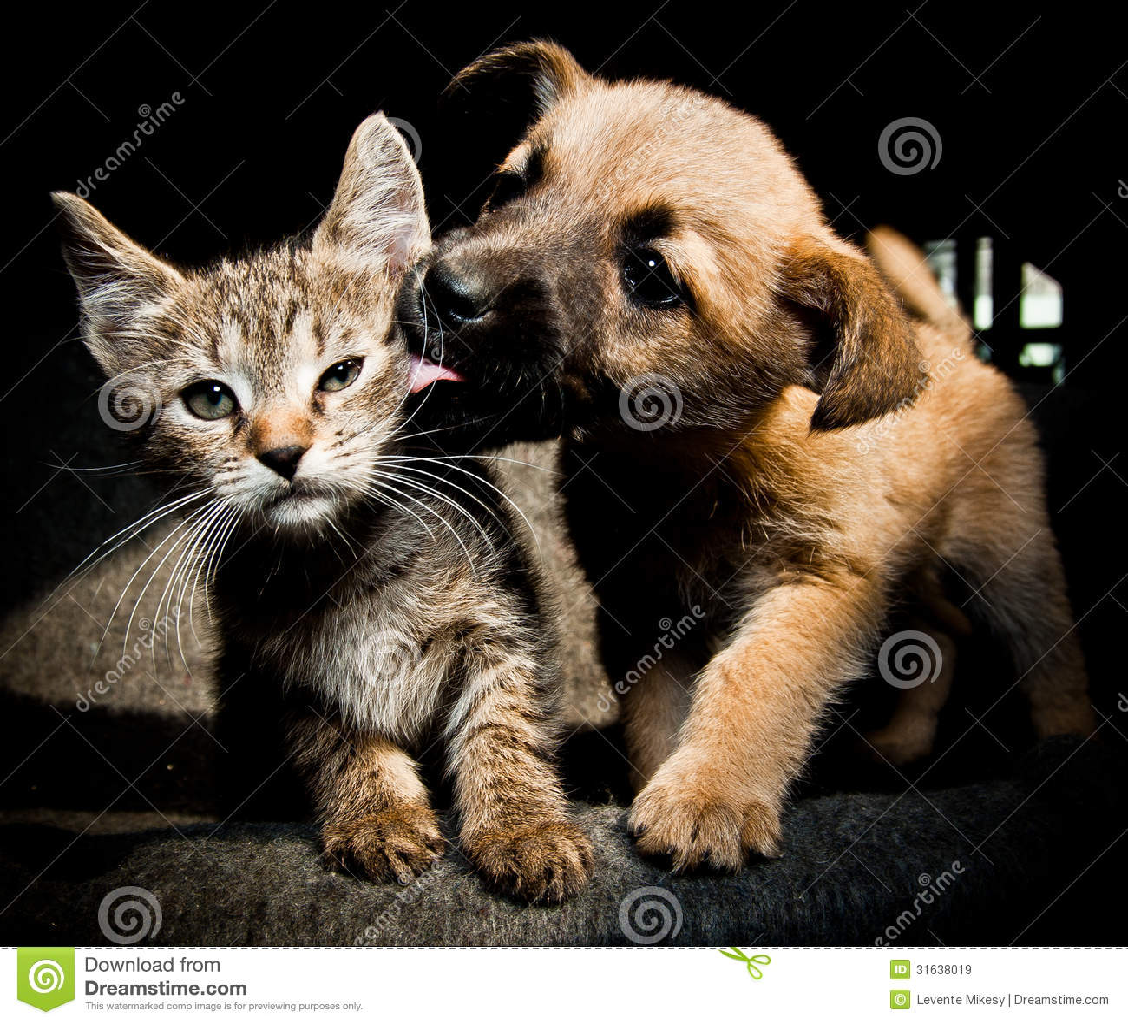 Αγάπη και φιλί γατακιών κουταβιών