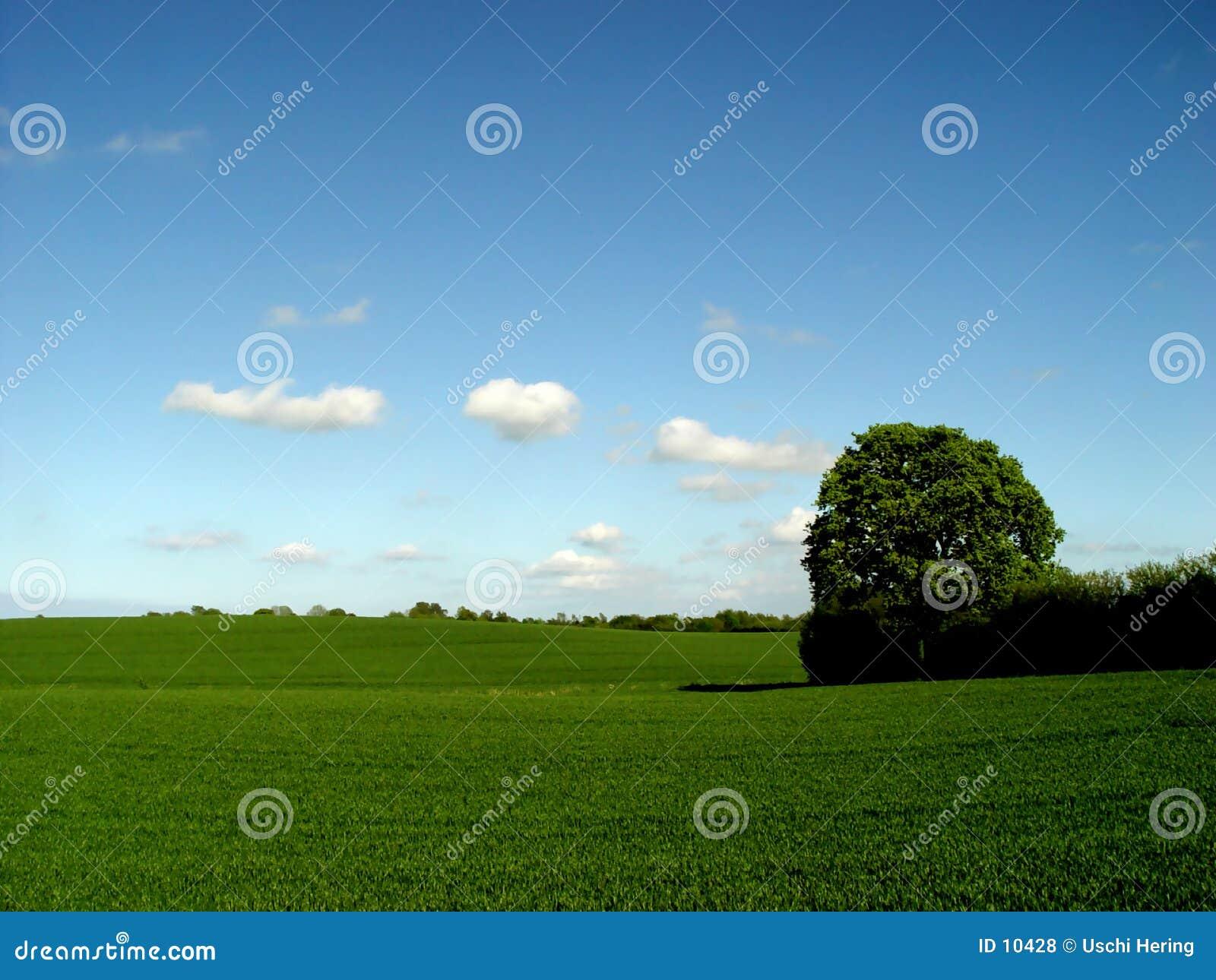 αγαπημένο δέντρο