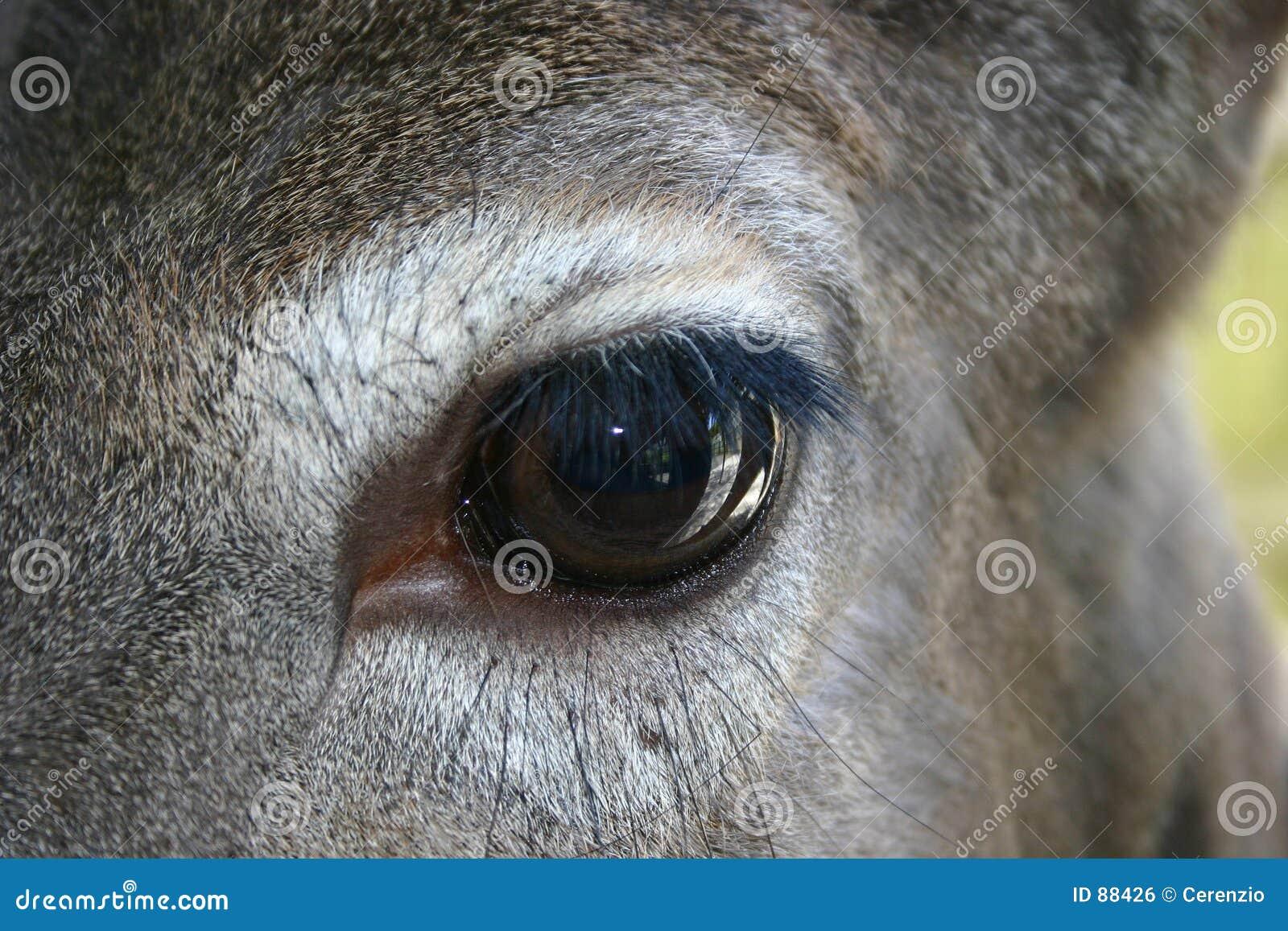 αγαπητό μάτι