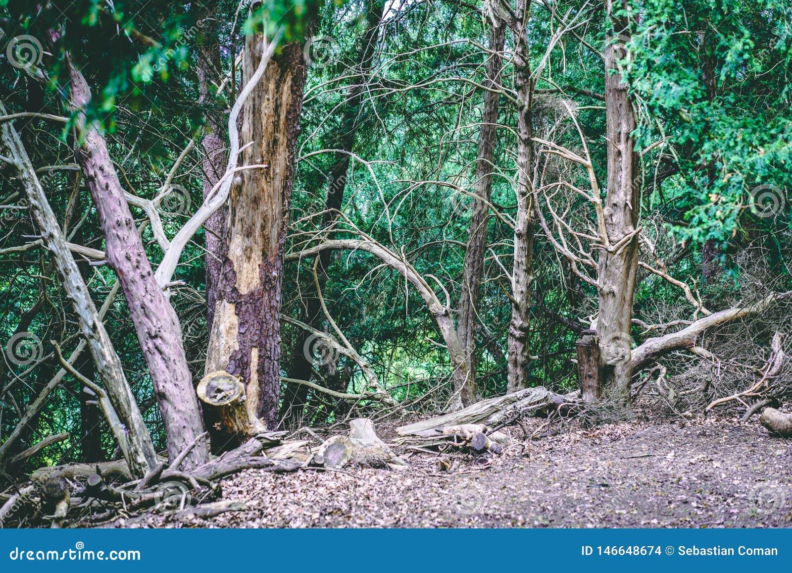 Αγγλικό δασόβιο πάρκο με την ήρεμη άποψη του πράσινου φυλλώματος