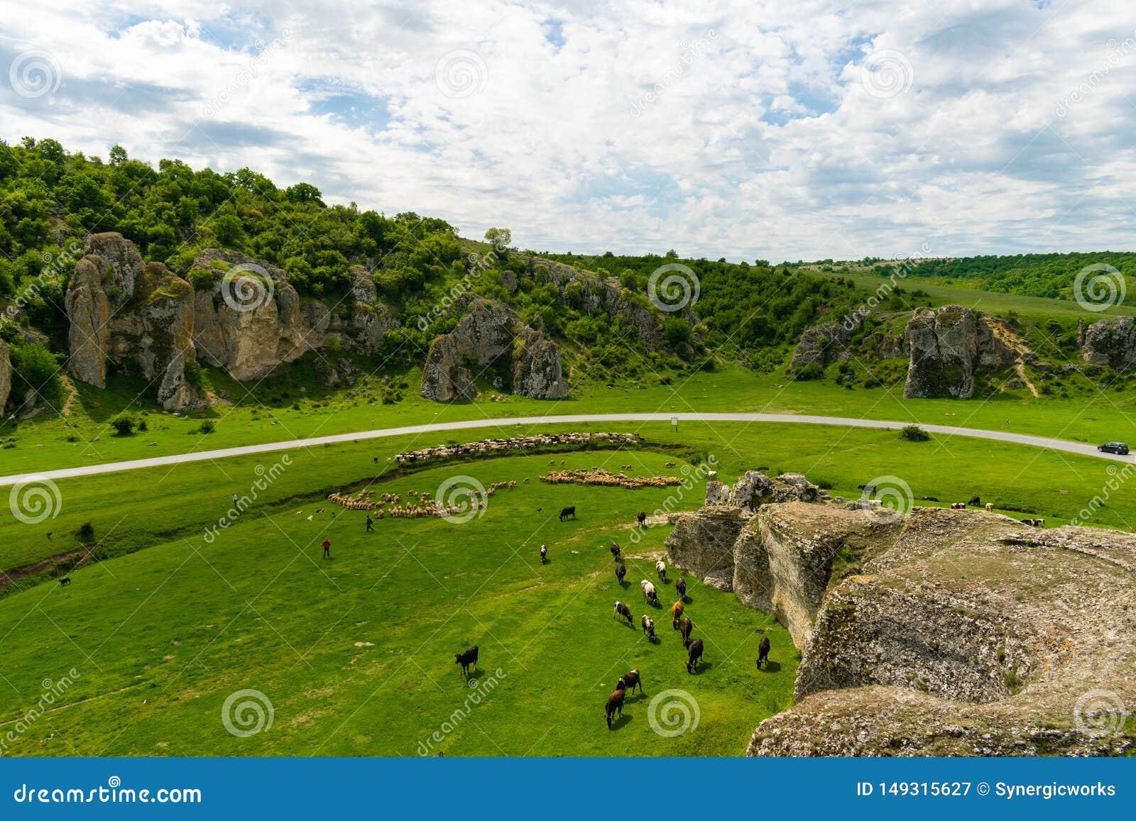 Αγελάδα και αίγες που βόσκουν στην περιοχή φαραγγιών Dobrogea, Ρουμανία