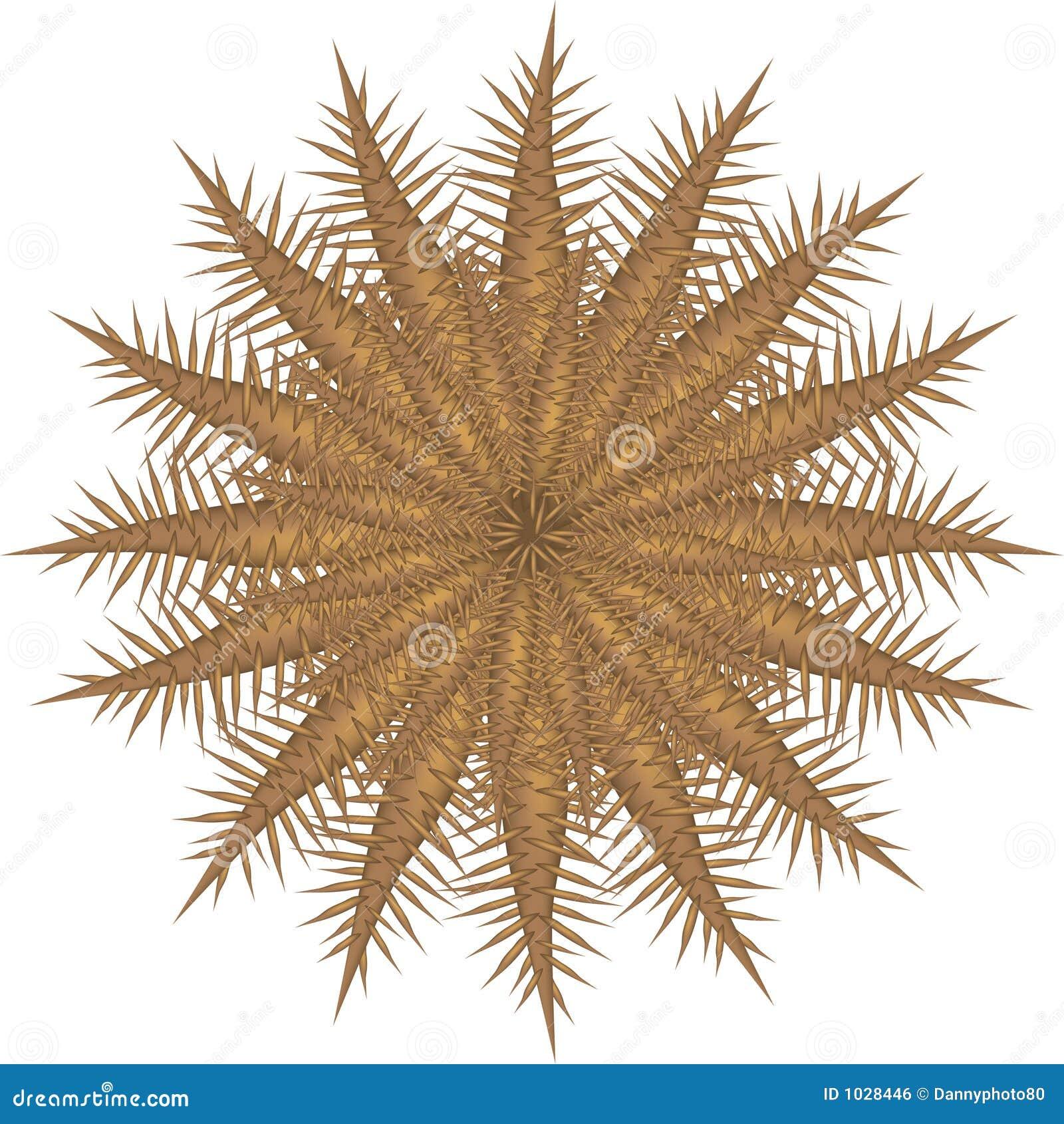 αγκάθια αστεριών κορωνών