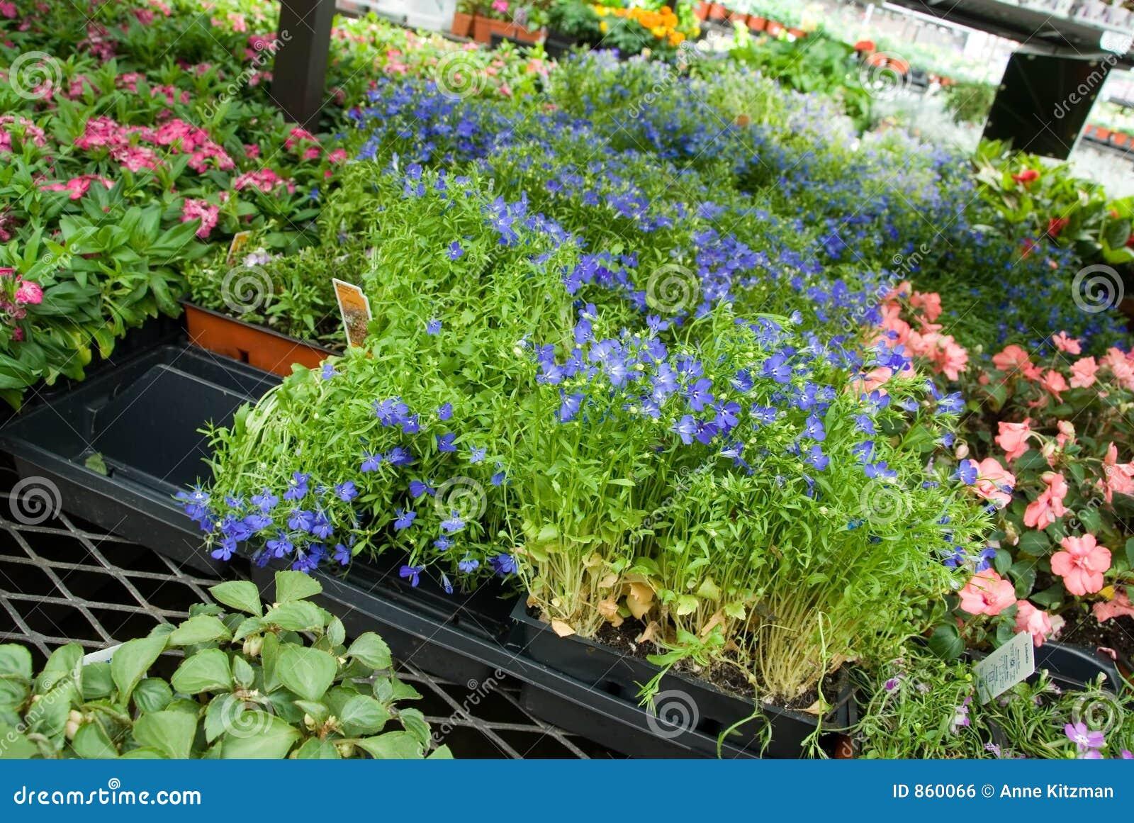 αγορά κήπων κεντρικών λουλουδιών