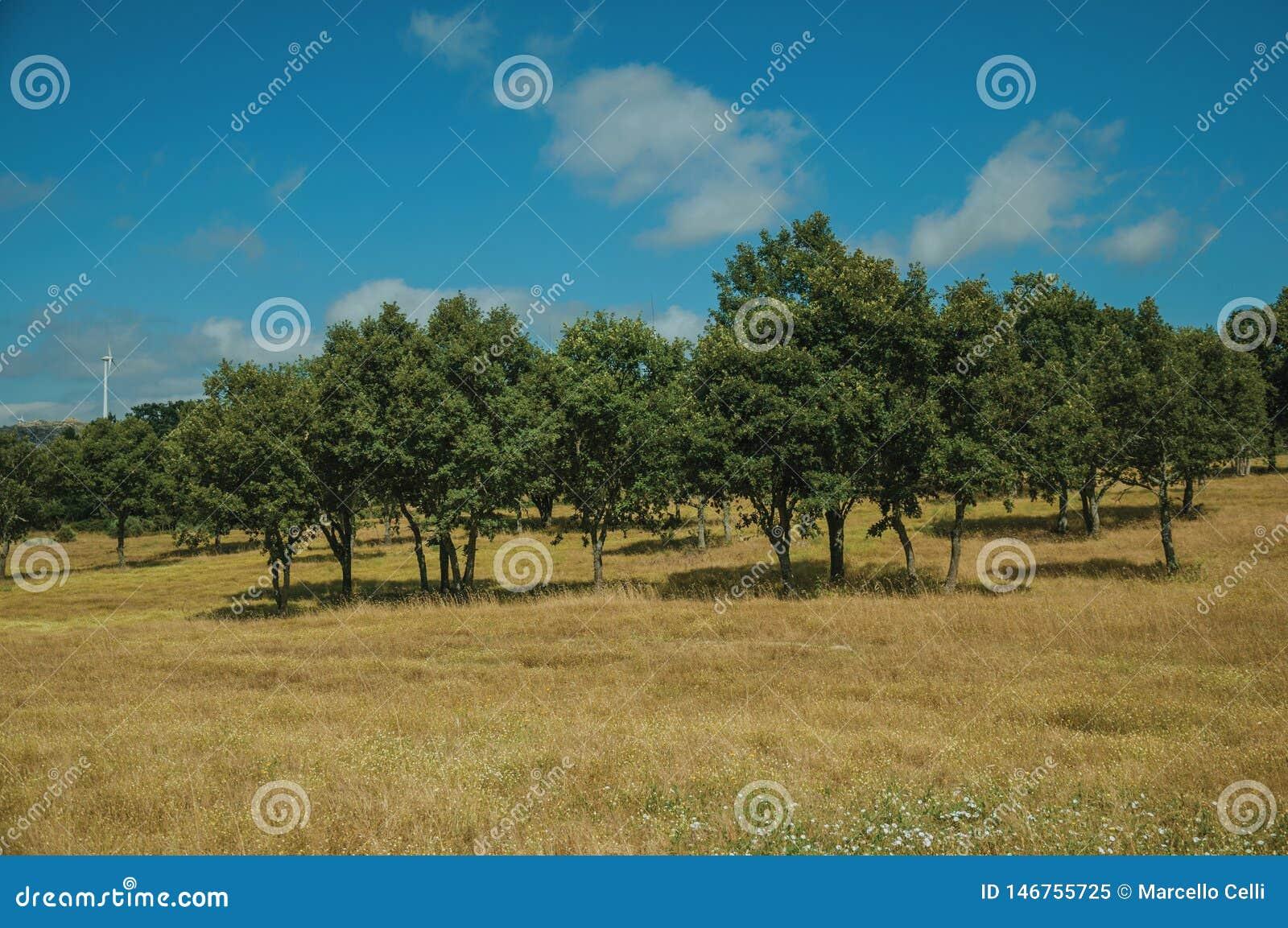 Αγροτικό τοπίο με τα πράσινα δέντρα σε έναν αγροτικό τομέα