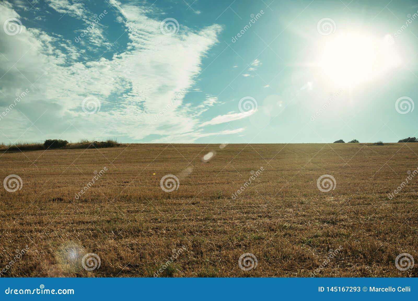 Αγροτικό τοπίο στο ηλιοβασίλεμα και τομέας που καλύπτεται από το άχυρ