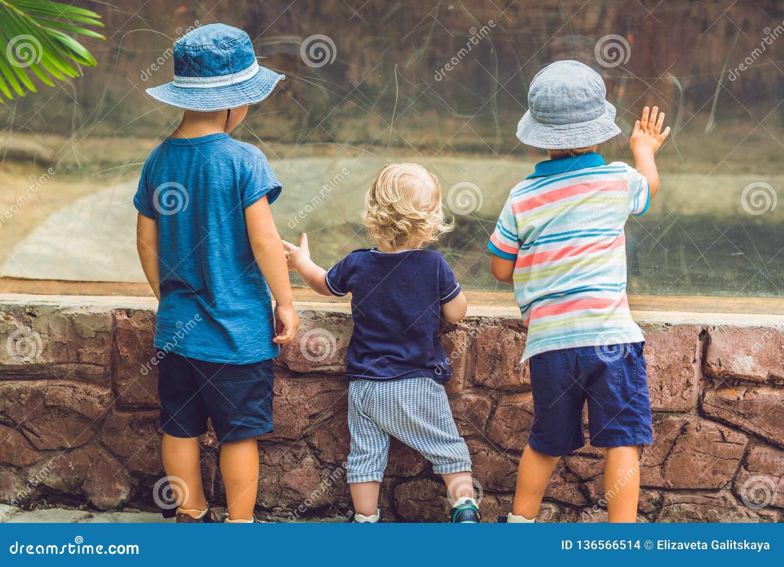 Αγόρια που προσέχουν τα ερπετά στο terrarium