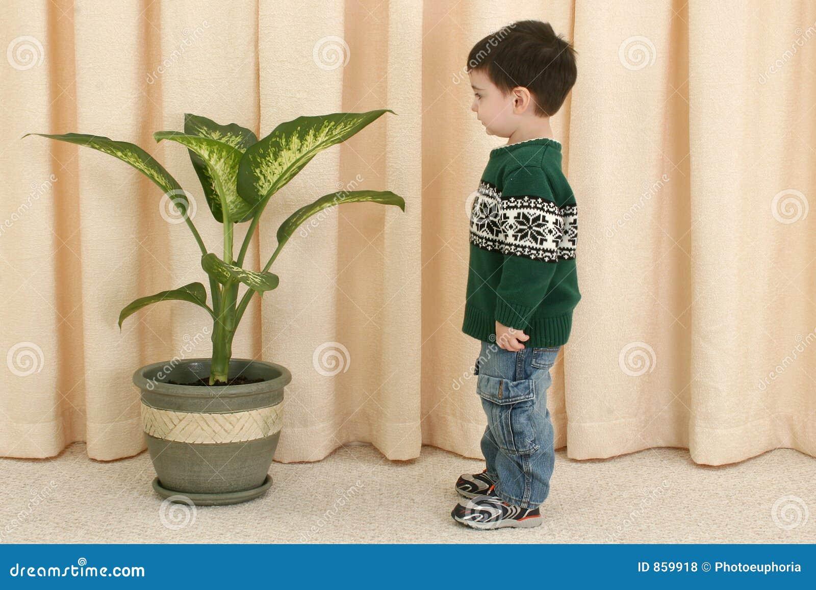 αγόρι που φαίνεται μικρό παιδί φυτών
