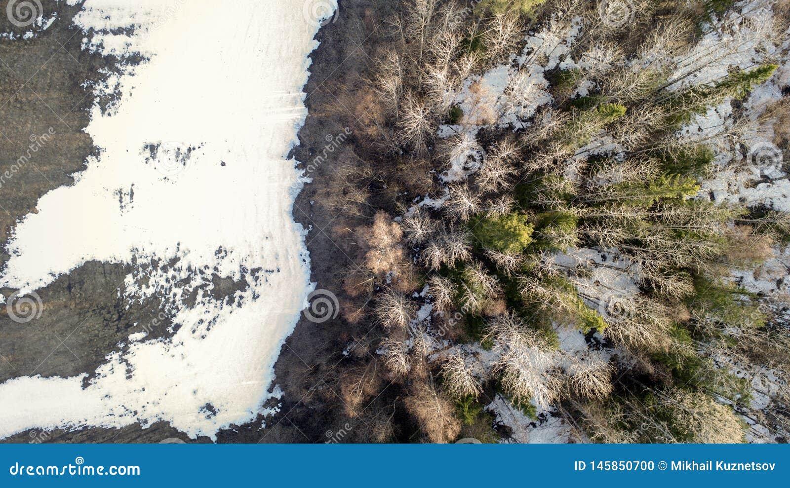 Αεροφωτογραφία ενός δάσους το χειμώνα