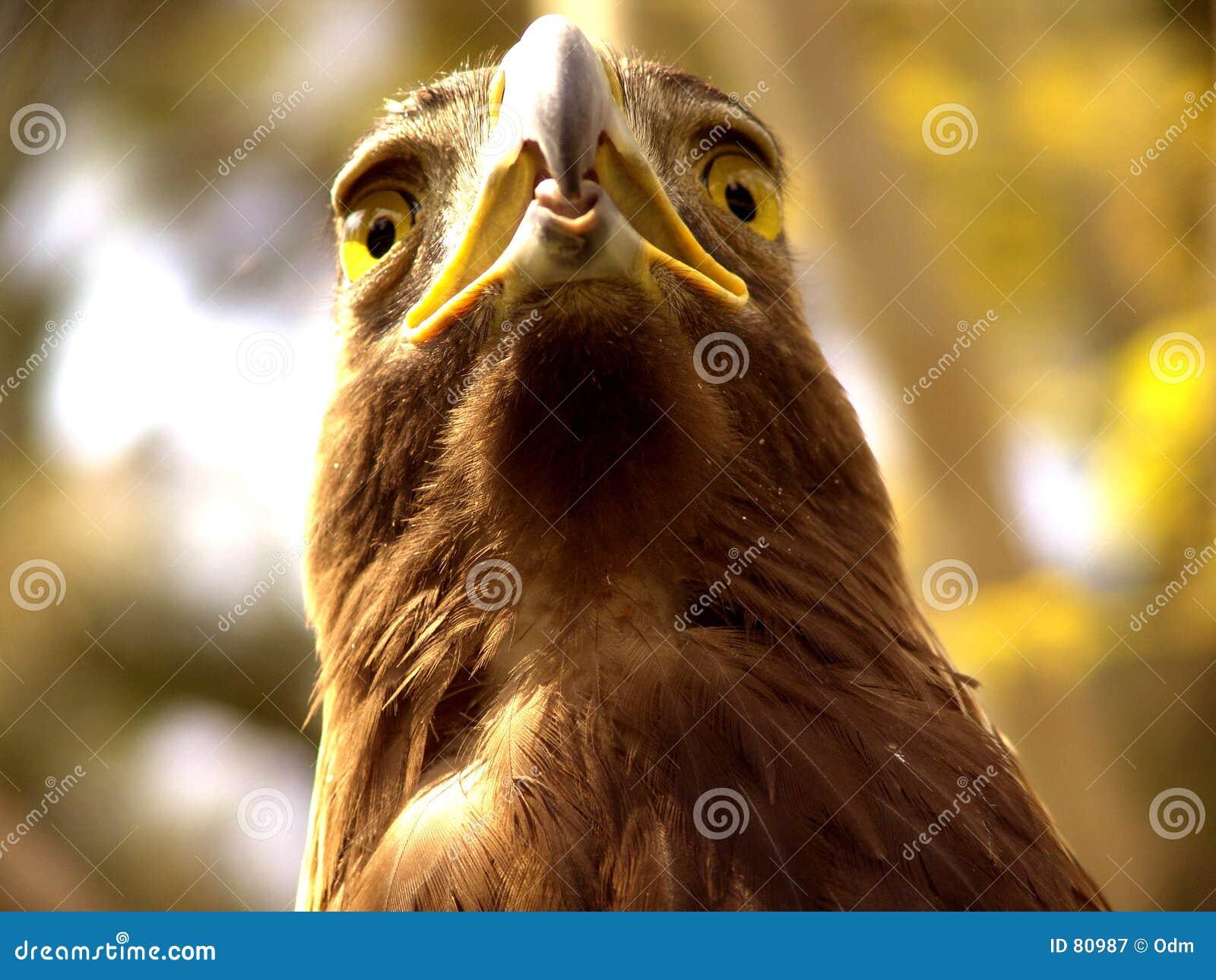 αετός πραγματικός