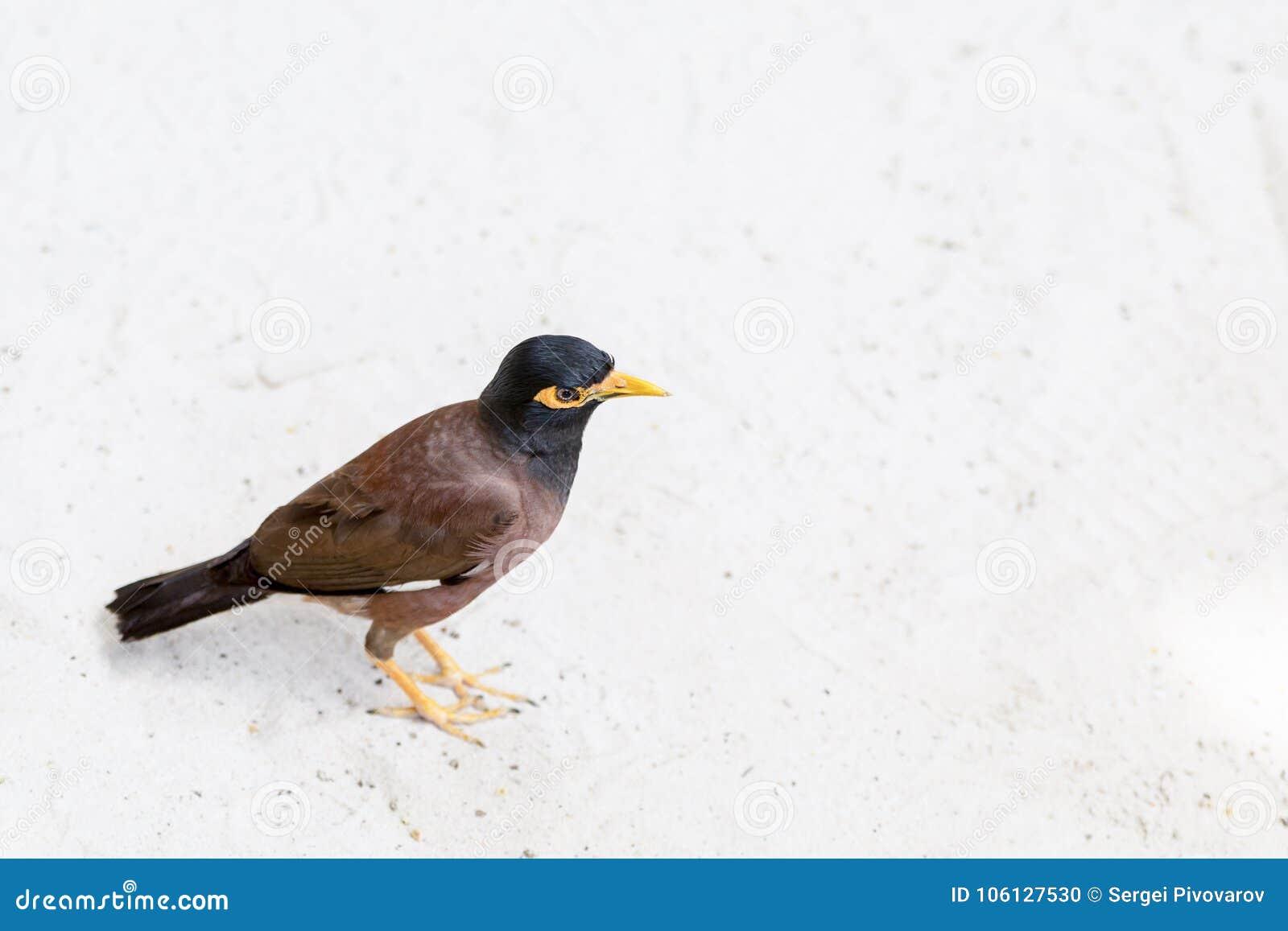 μεγάλο μαύρο πουλί καρύκευμαπαλιά Ebony πορνό