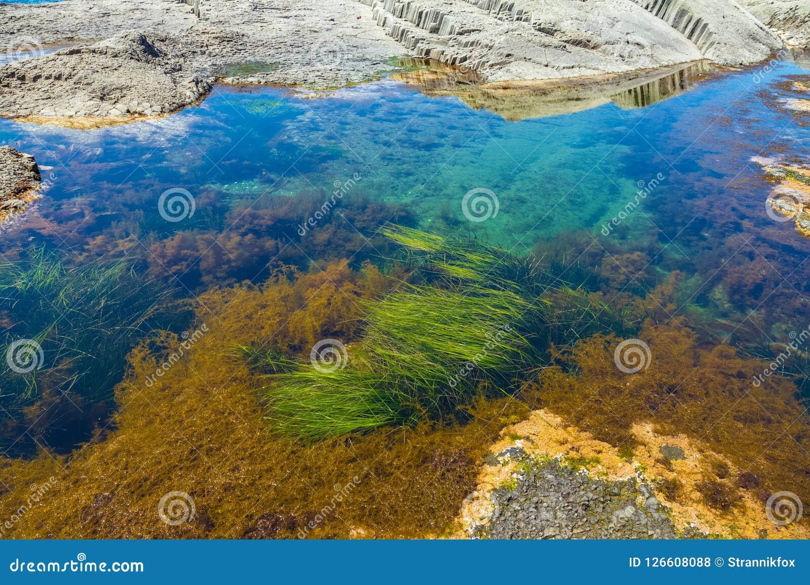 Ακρωτήριο Stolbchaty Ακρωτήριο στη δυτική ακτή του νησιού Kunashi