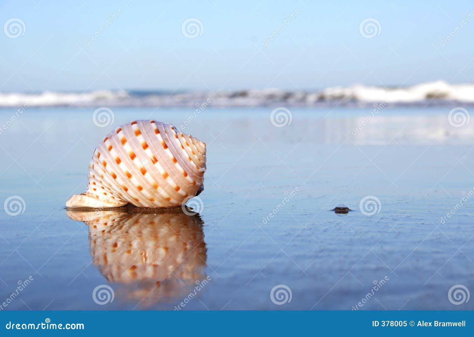 ακτή θαλασσινών κοχυλιών