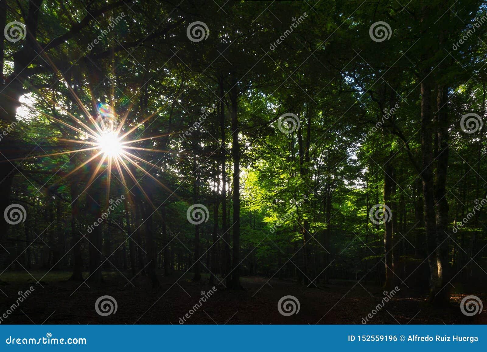 Ακτίνες ήλιων μεταξύ των δέντρων στο δάσος Urbasa