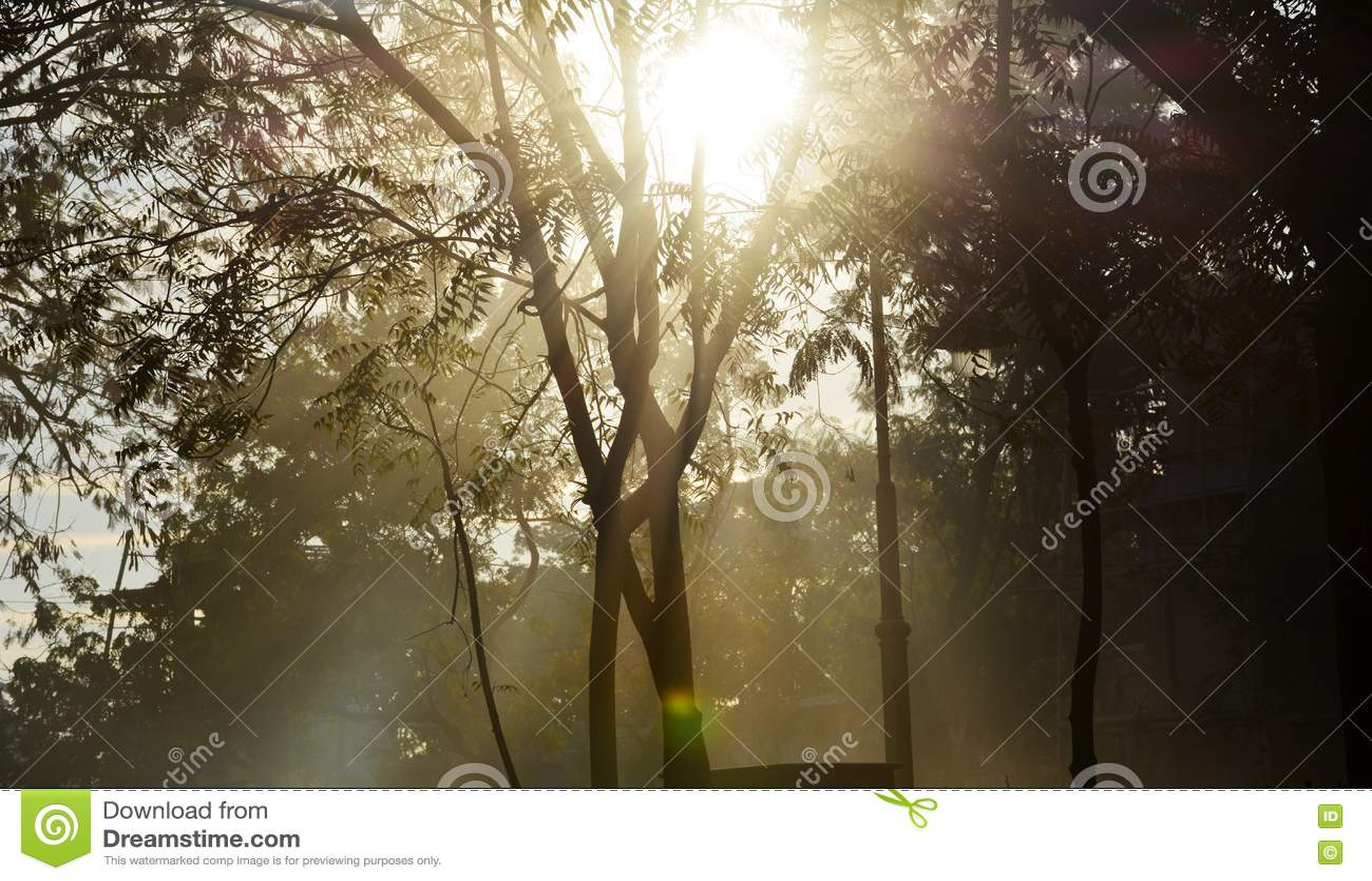 Ακτίνες ήλιων που φιλτράρουν μέσω των δέντρων