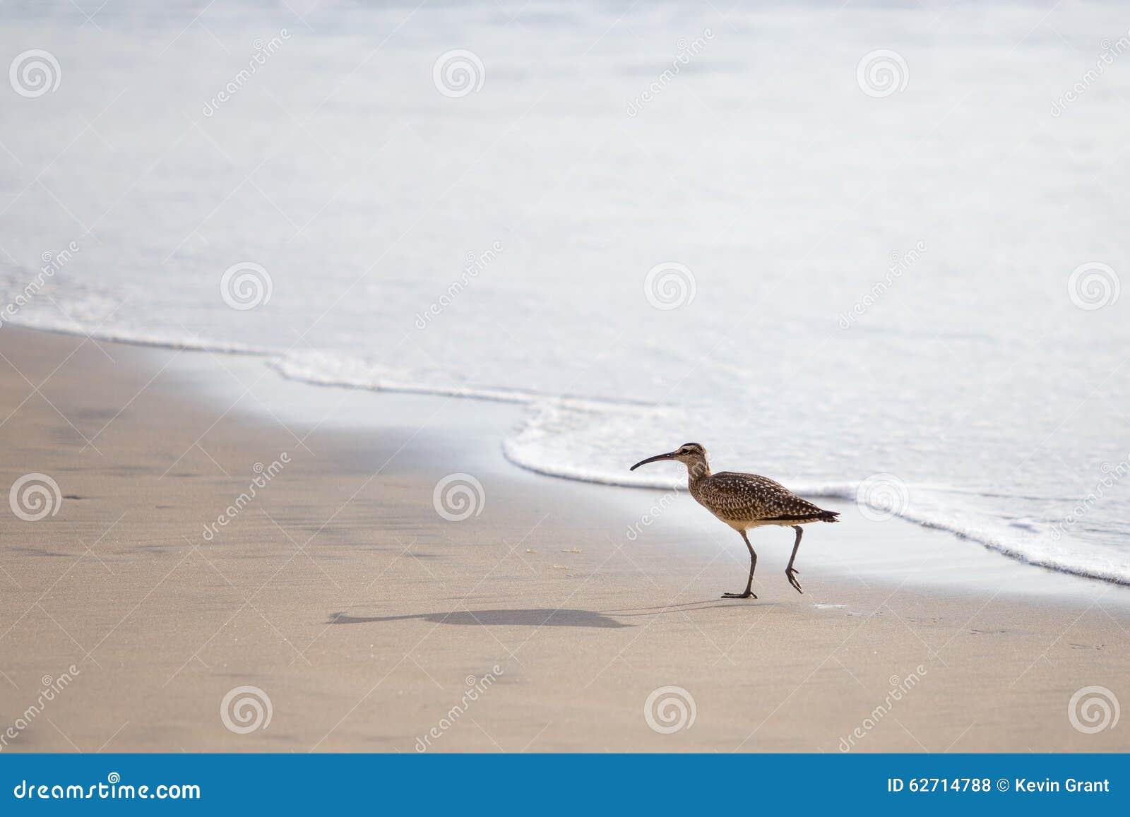 Ακτοτούρλι στην παραλία