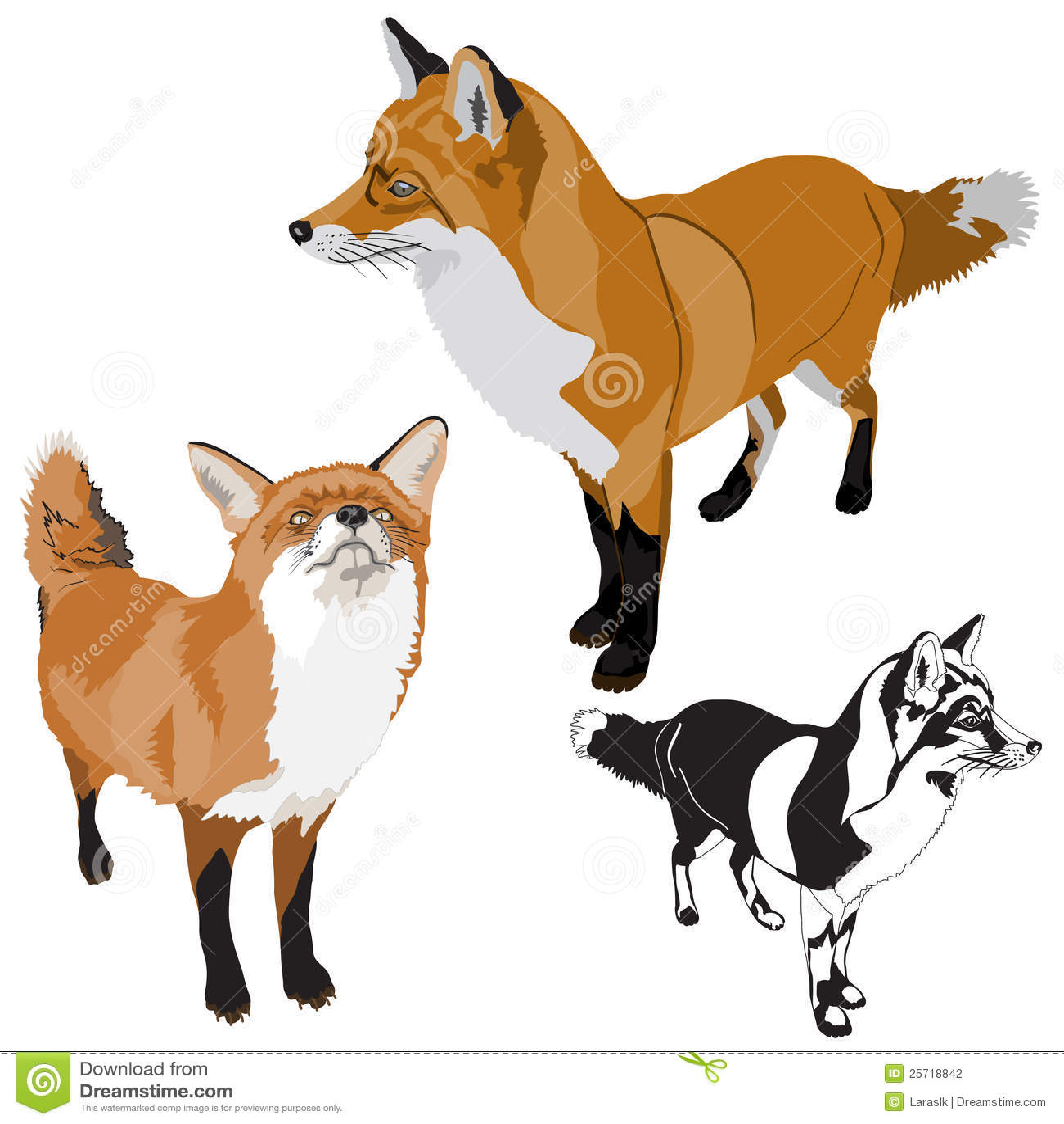 αλεπούδες που τίθενται