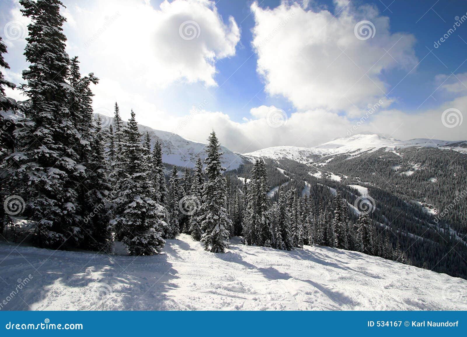 αλπικός δασικός χιονώδης