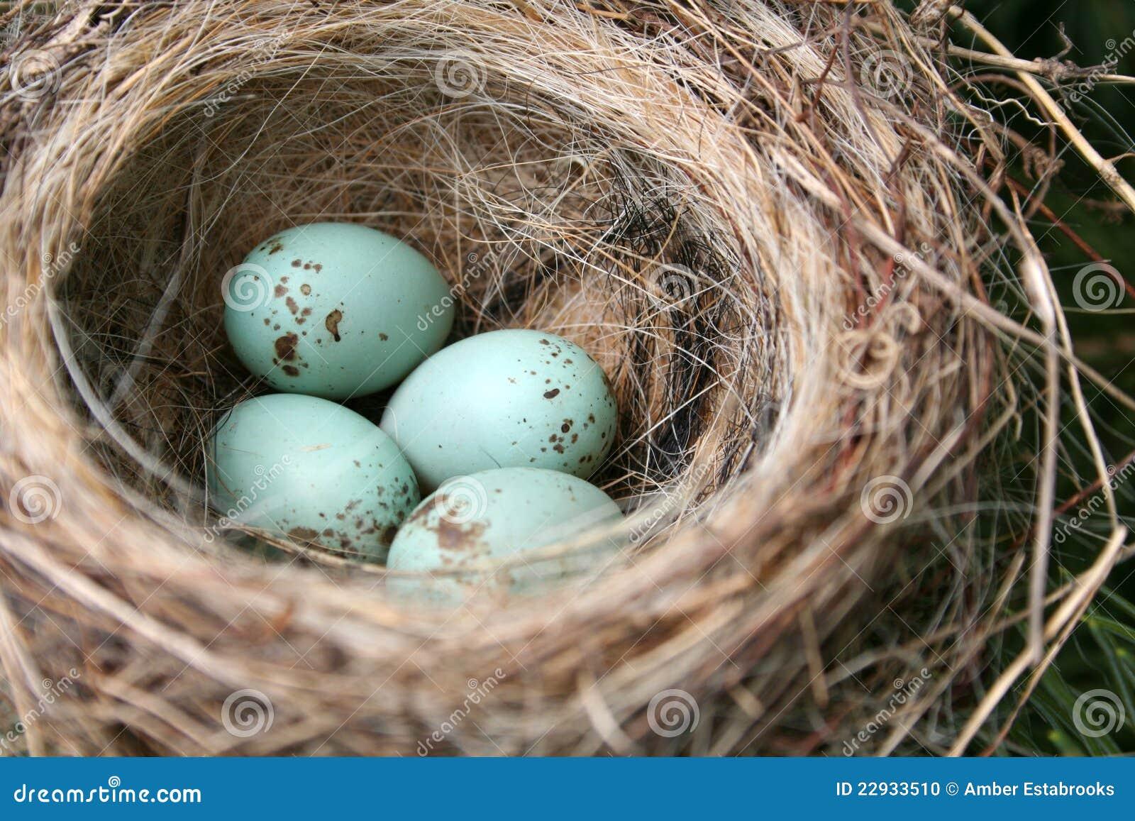 αμερικανικά αυγά Robin