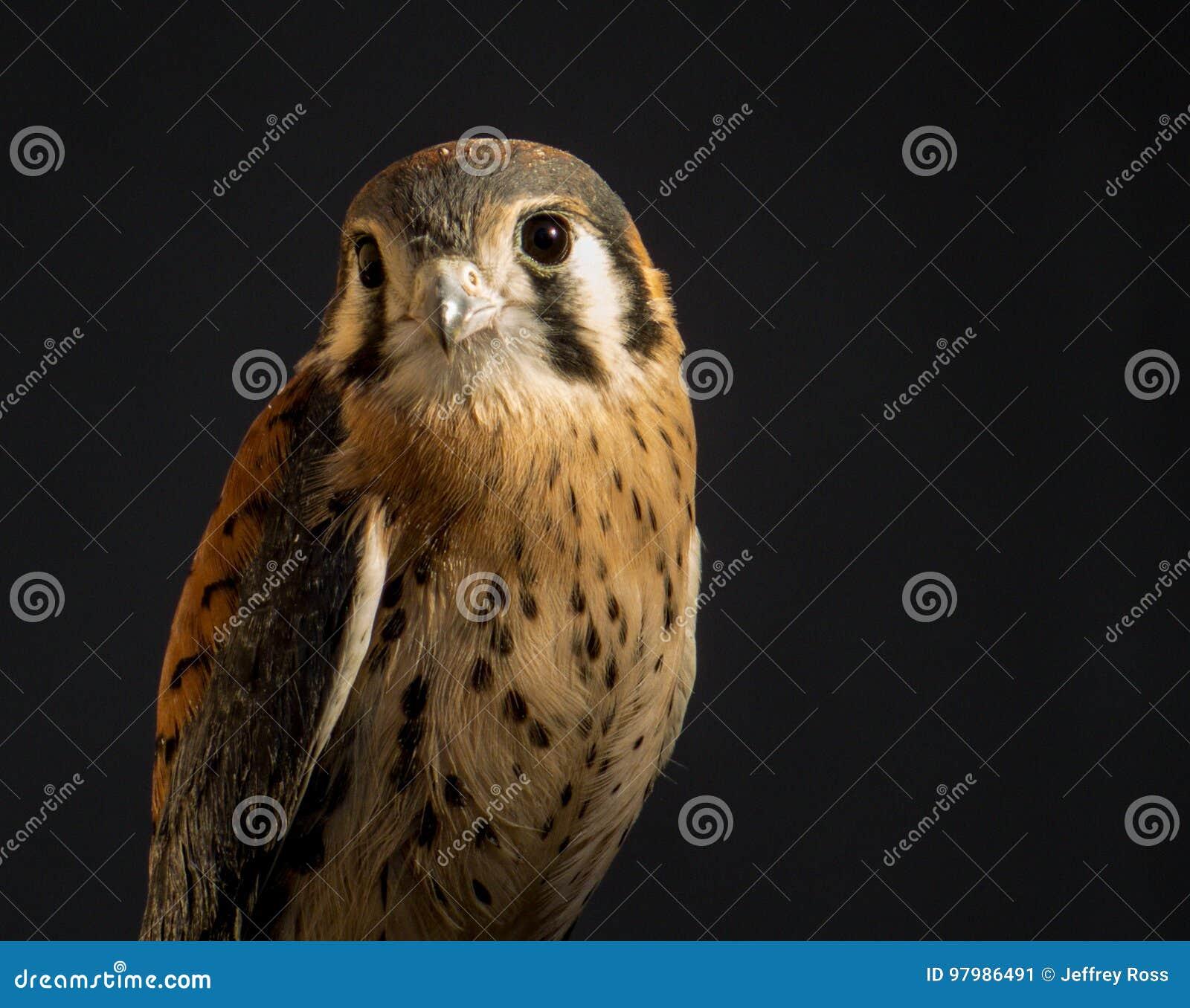 Κατεβάστε αυτή την δωρεάν εικόνα σχετικά με Cockatiel Πουλί Οικιακά Πτηνά από την τεράστια βιβλιοθήκη ελεύθερων πνευματικών δικαιωμάτων εικόνων και.