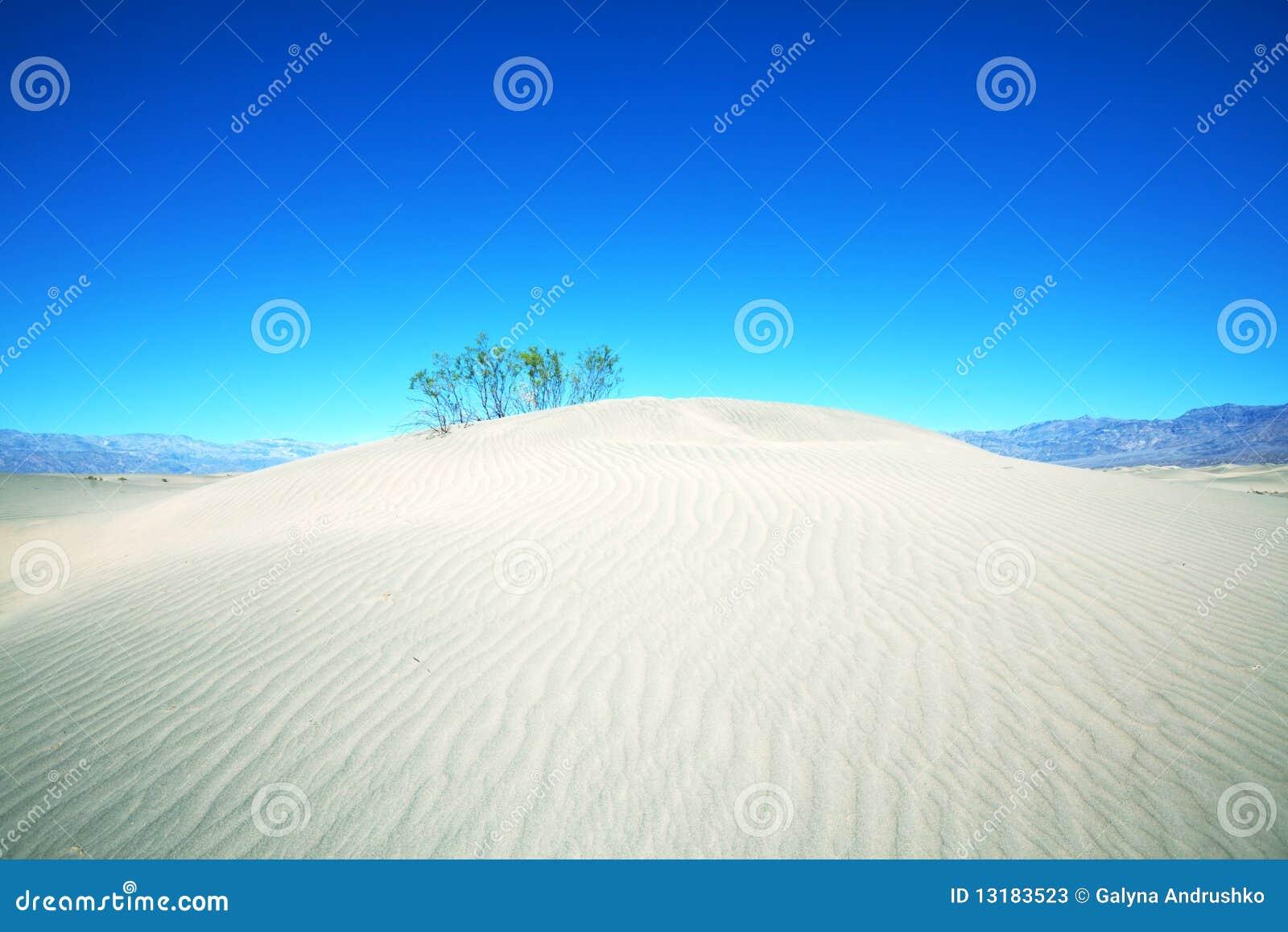 αμμόλοφος