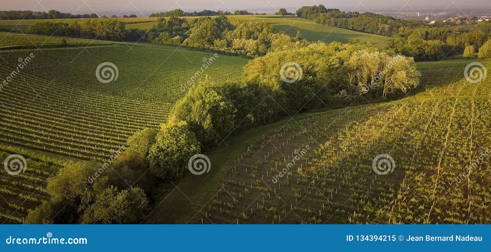 Αμπελώνες του Μπορντώ, Entre Deux Mers, Aquitaine, Gironde τμήμα, εναέρια άποψη