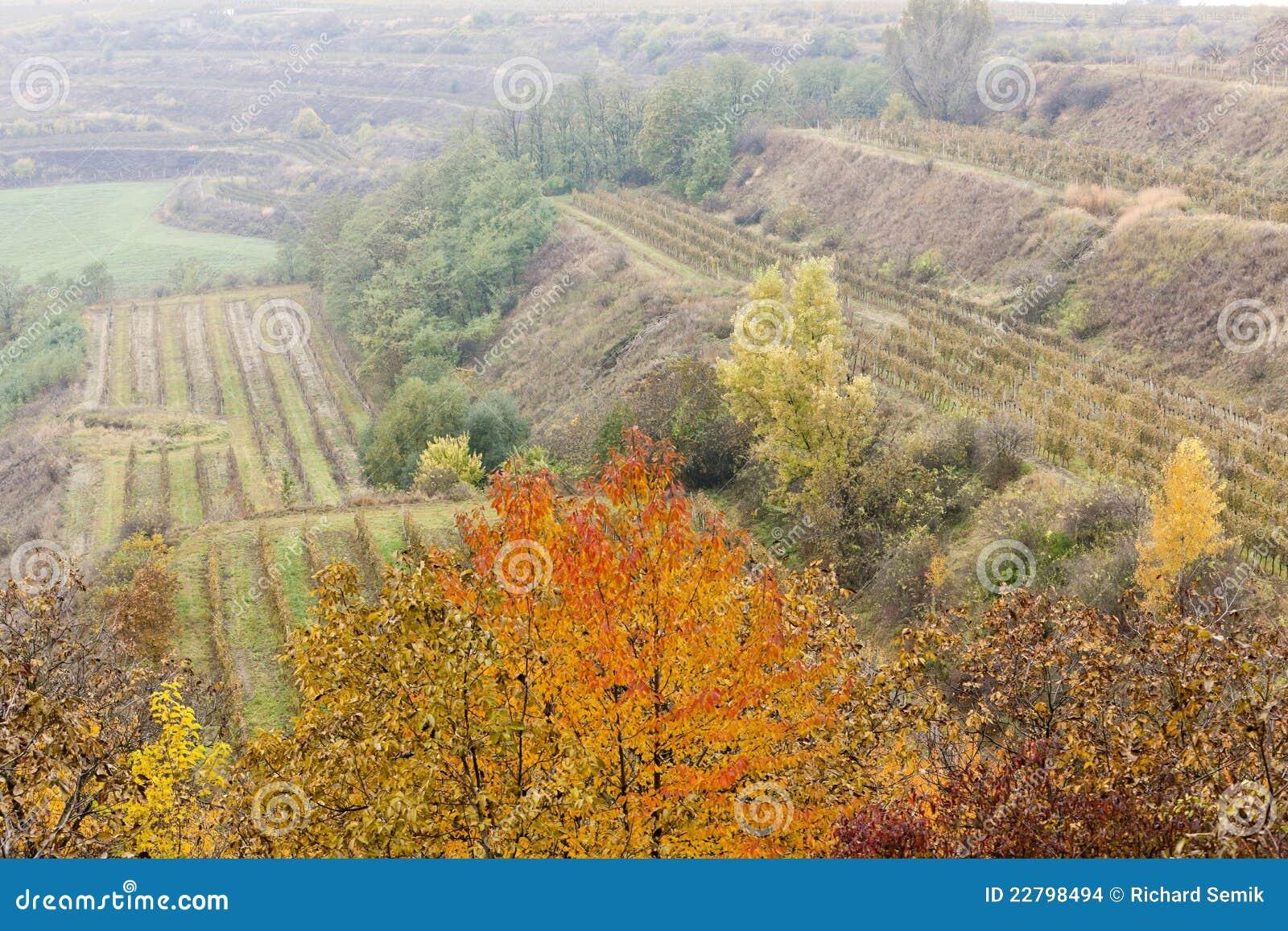 Αμπελώνες το φθινόπωρο
