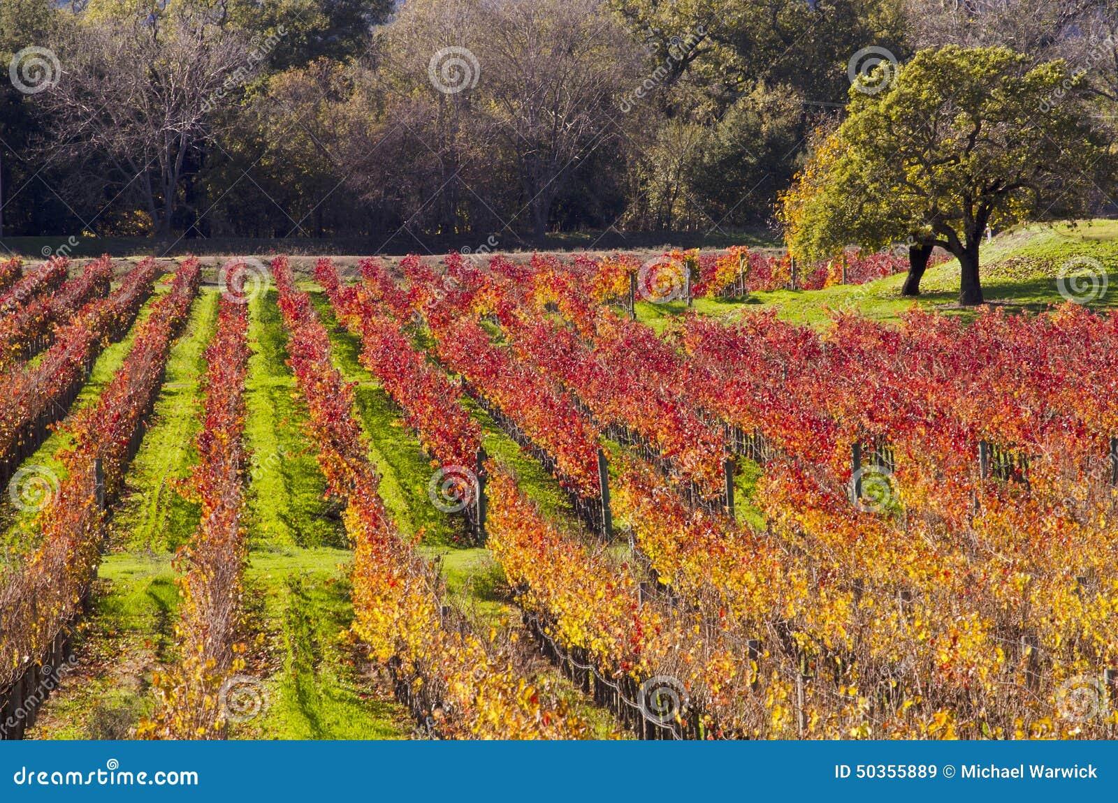 Αμπελώνες κοιλάδων Napa στα χρώματα φθινοπώρου