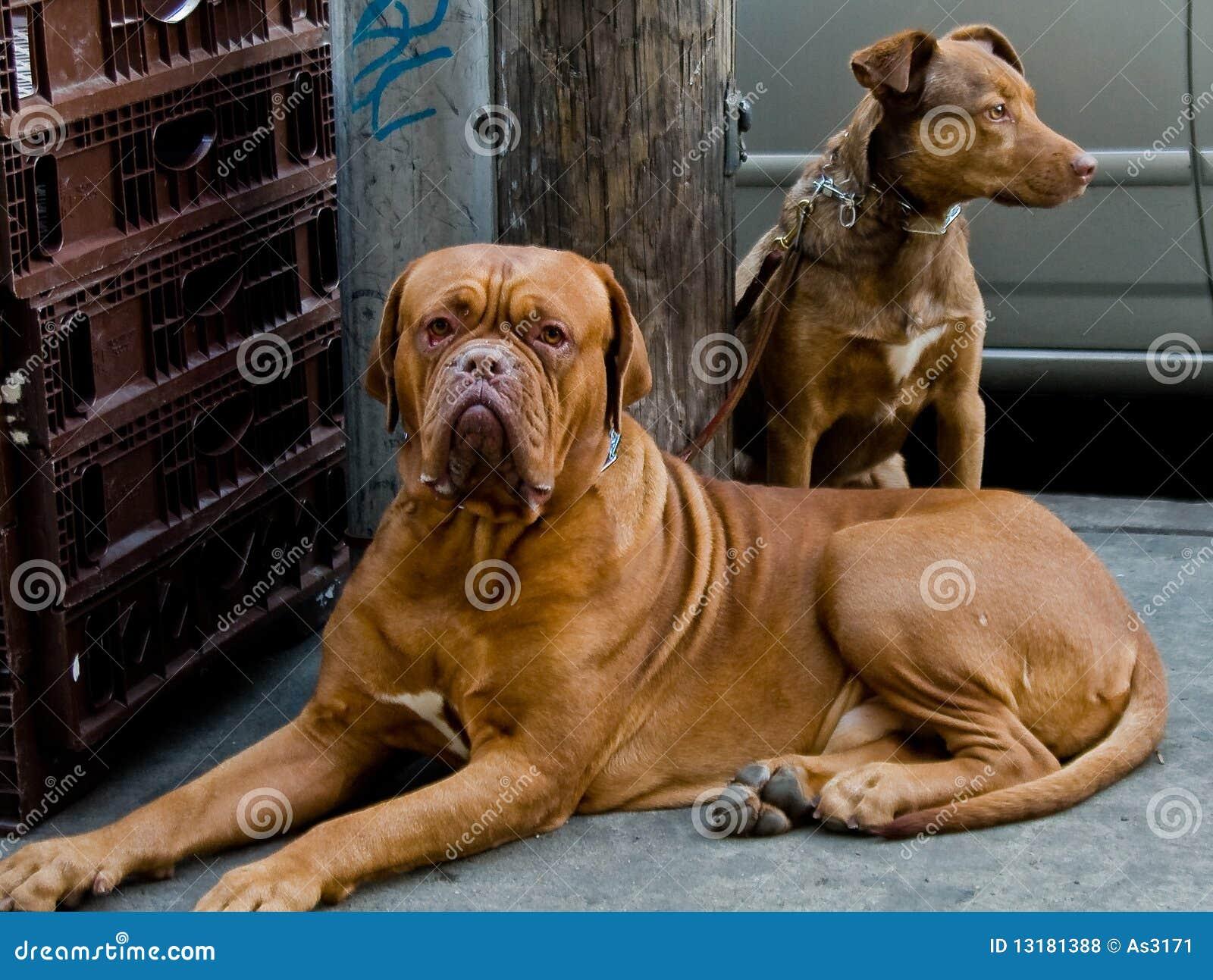 αναμονή οδών σκυλιών
