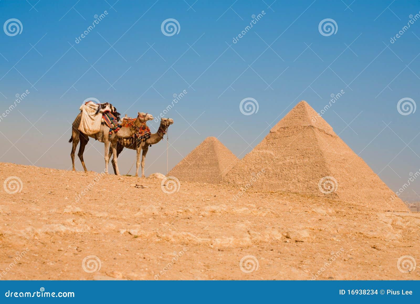αναμονή πυραμίδων khufu καμηλών c