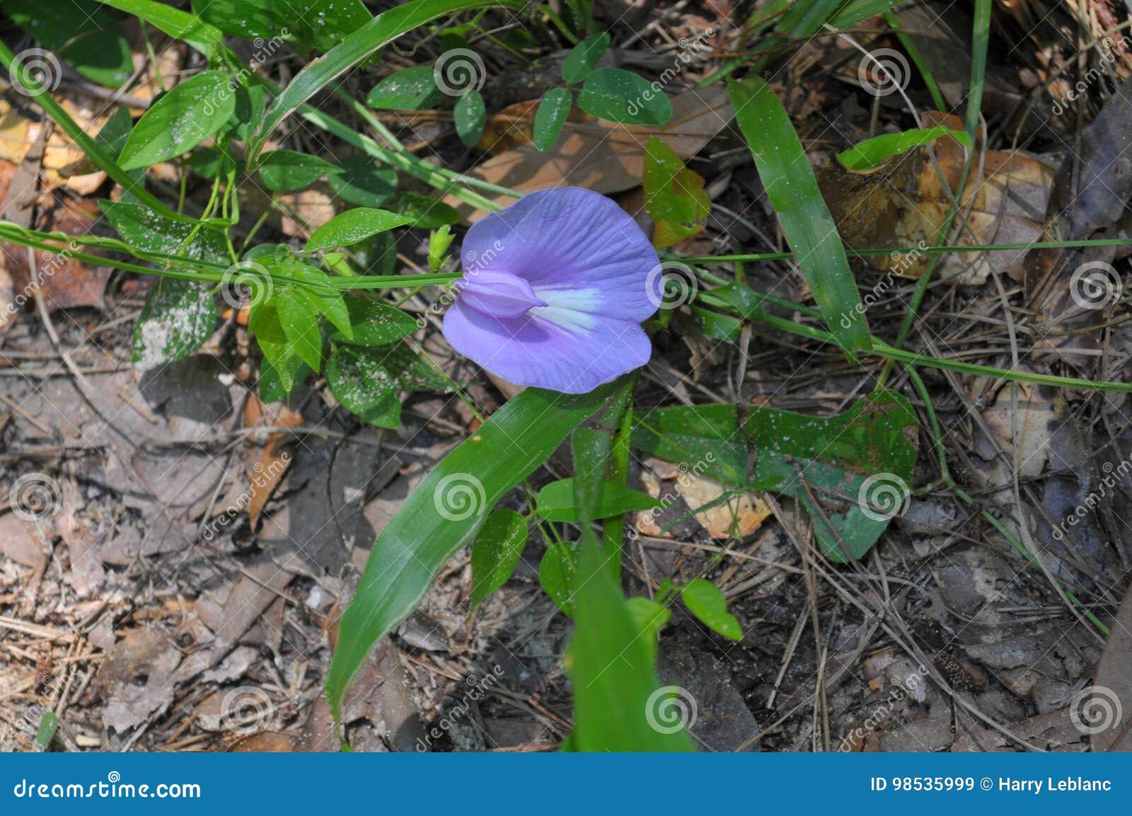 Αναπτυγμένος λουλούδι