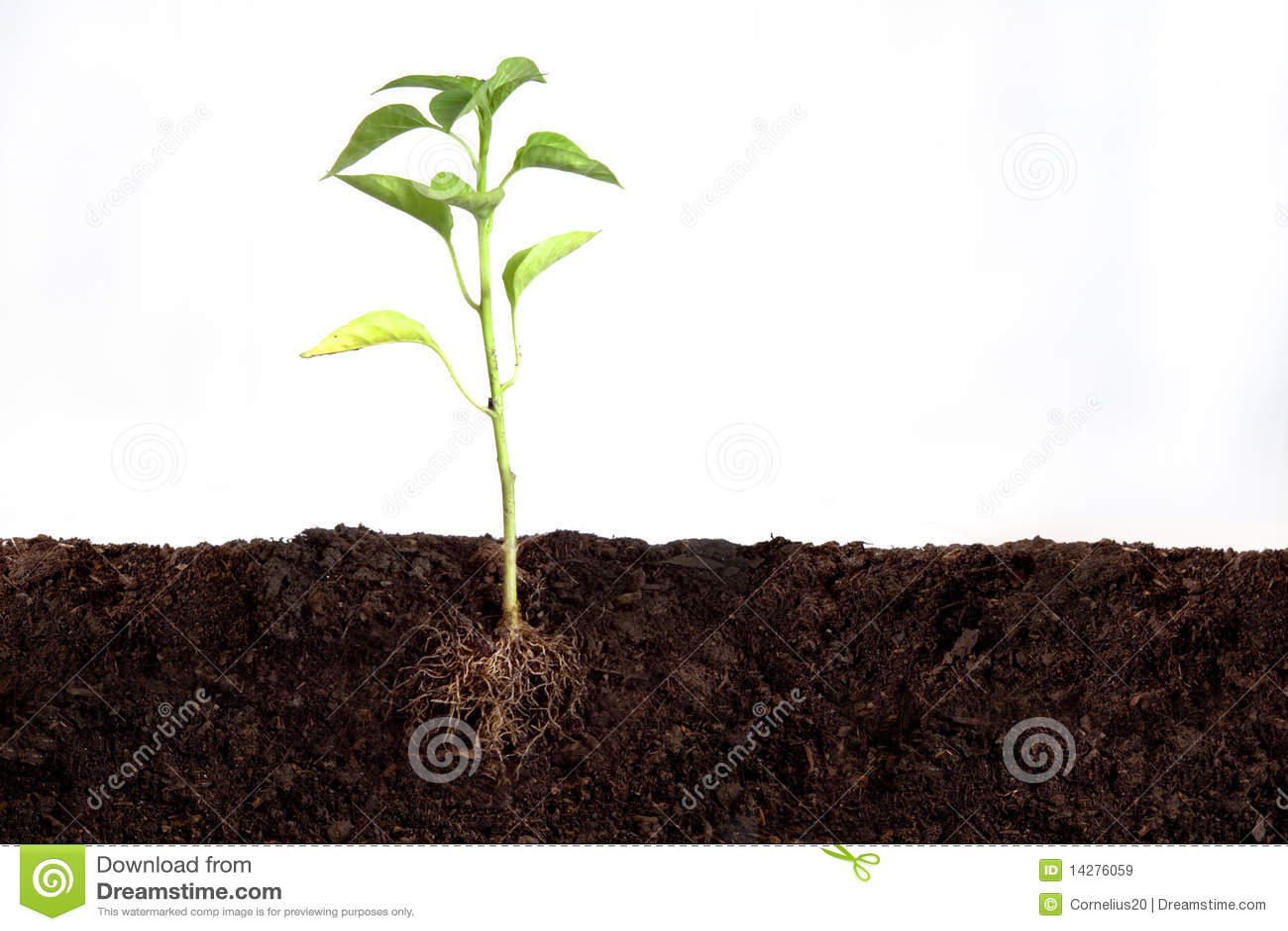 αναπτύσσοντας φυτό