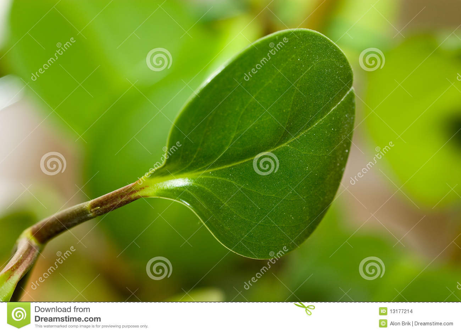 ανασκόπησης οργανικό φυτό