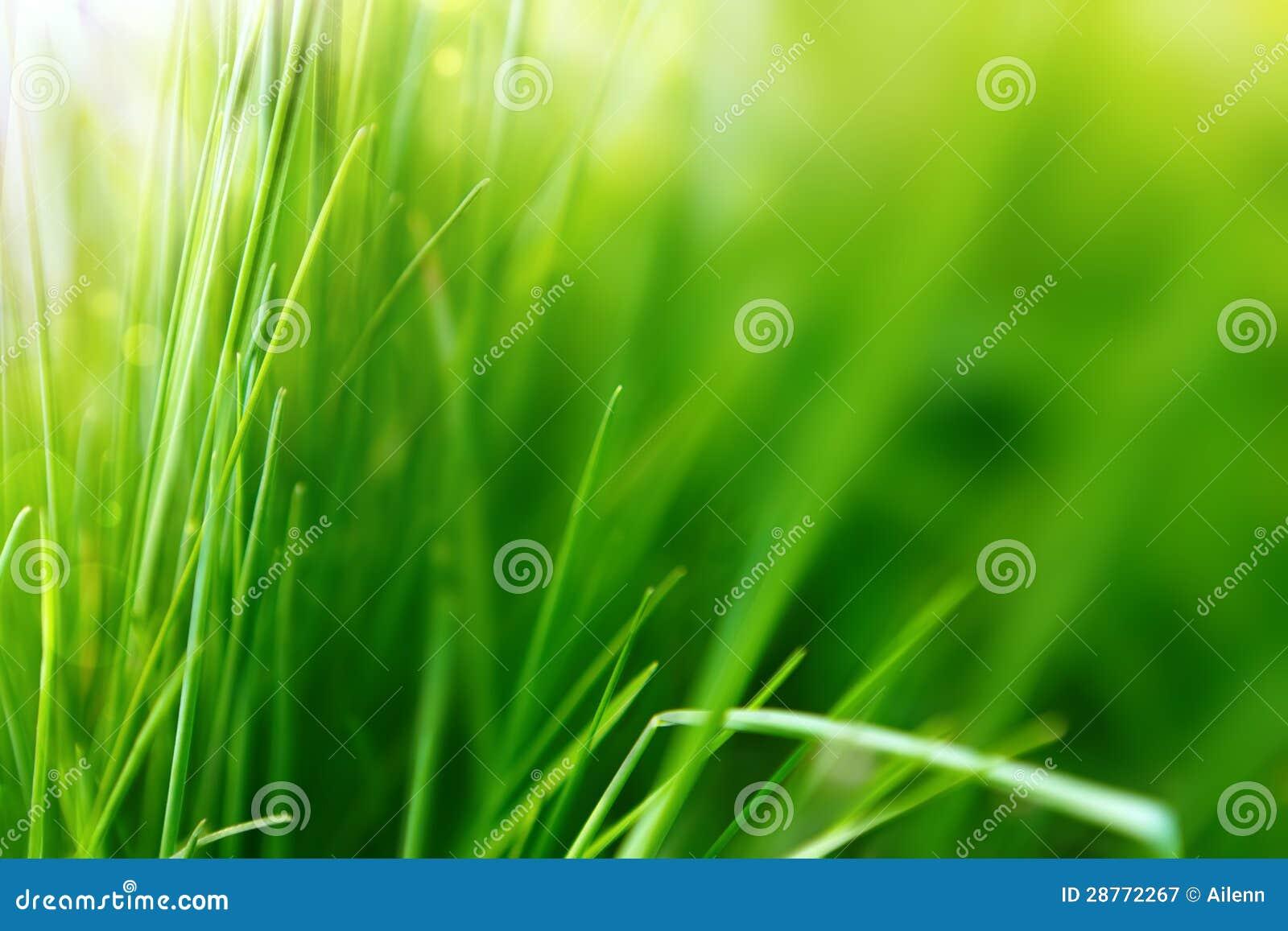 Ανασκόπηση άνοιξης ή καλοκαιριού με την πράσινη χλόη