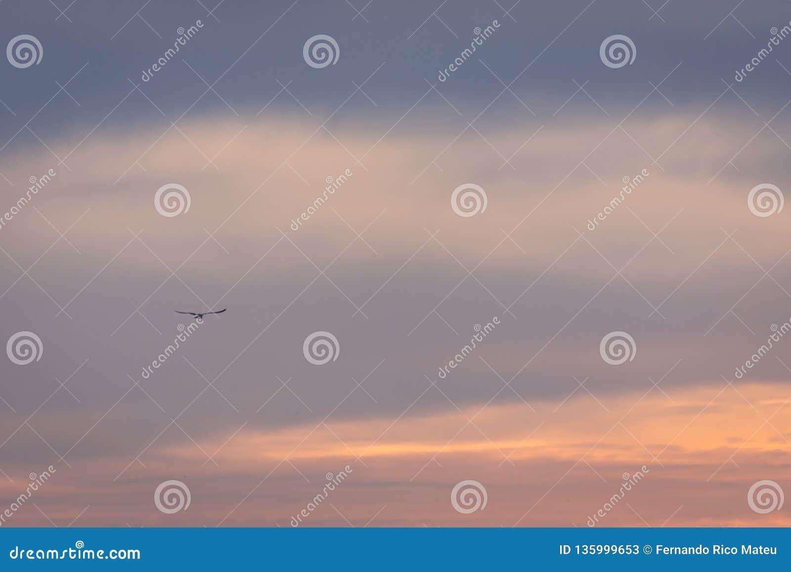 Ανατολή ηλιοβασιλέματος ουρανού χρώματος μόνο Ζωηρόχρωμη εικόνα
