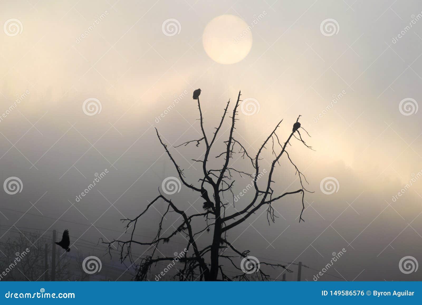 Ανατολή στη Γουατεμάλα, δέντρο με τις καρακάξες που βγάζει την πτήση Ήλιος στην υδρονέφωση