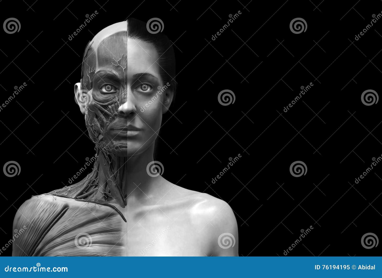 φωτογραφίες των γυναικών που δίνουν το κεφάλι